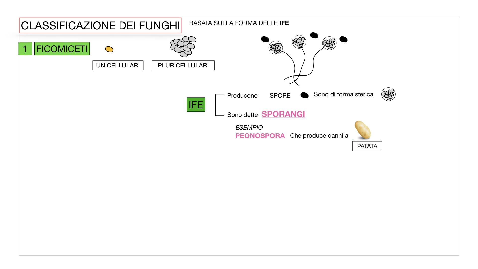 10. i funghi_SIMULAZIONE PARTE2.011