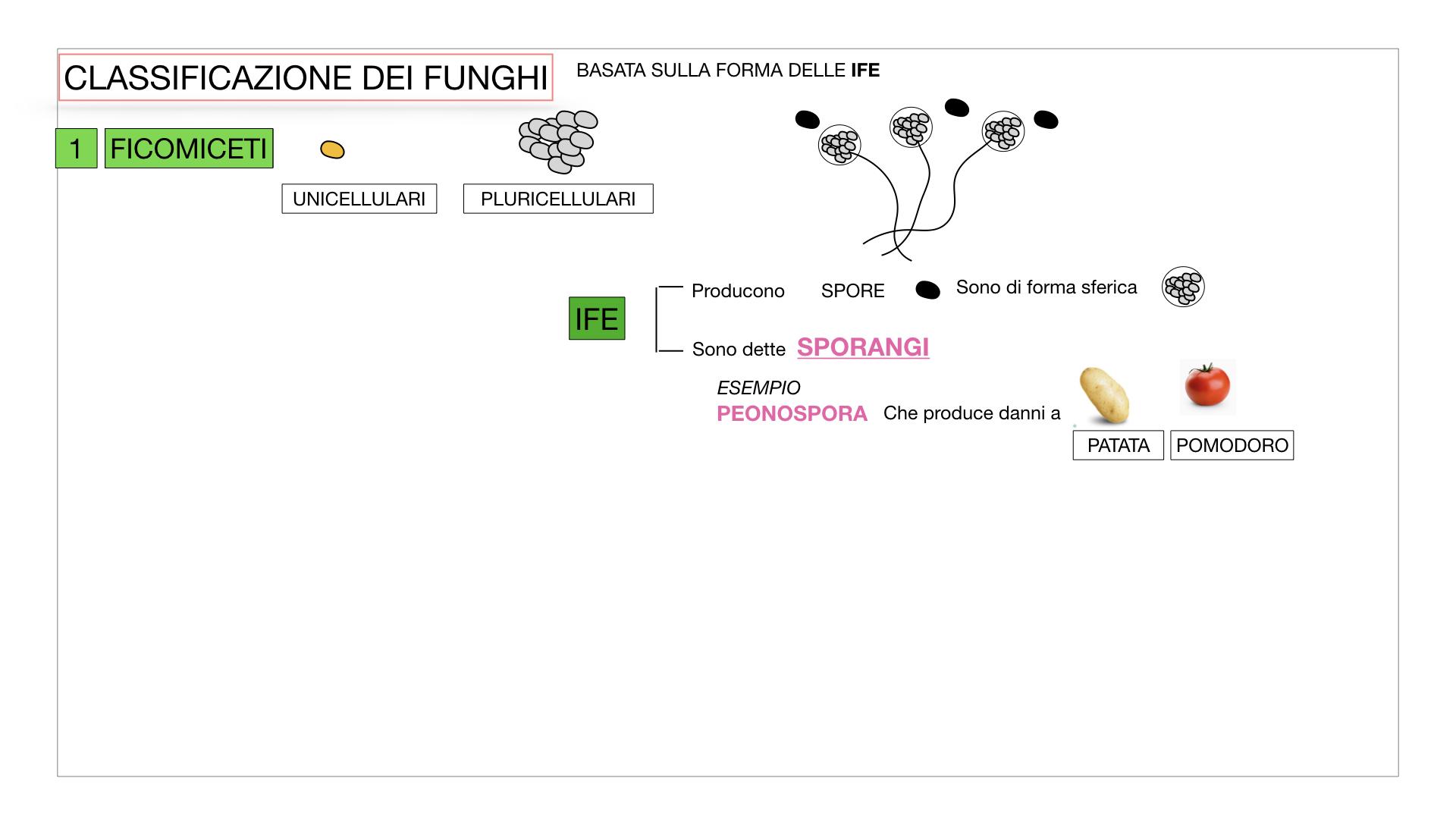 10. i funghi_SIMULAZIONE PARTE2.012