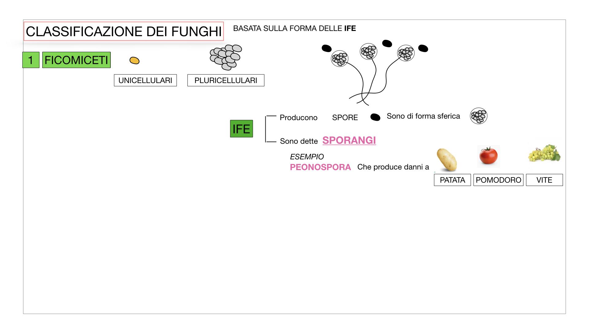10. i funghi_SIMULAZIONE PARTE2.013