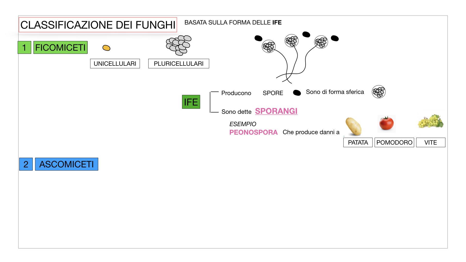10. i funghi_SIMULAZIONE PARTE2.014