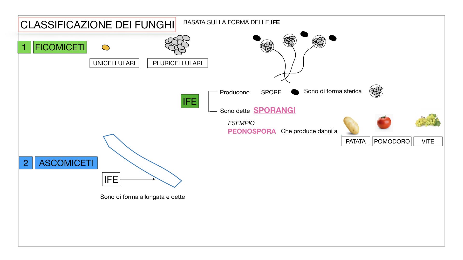 10. i funghi_SIMULAZIONE PARTE2.015