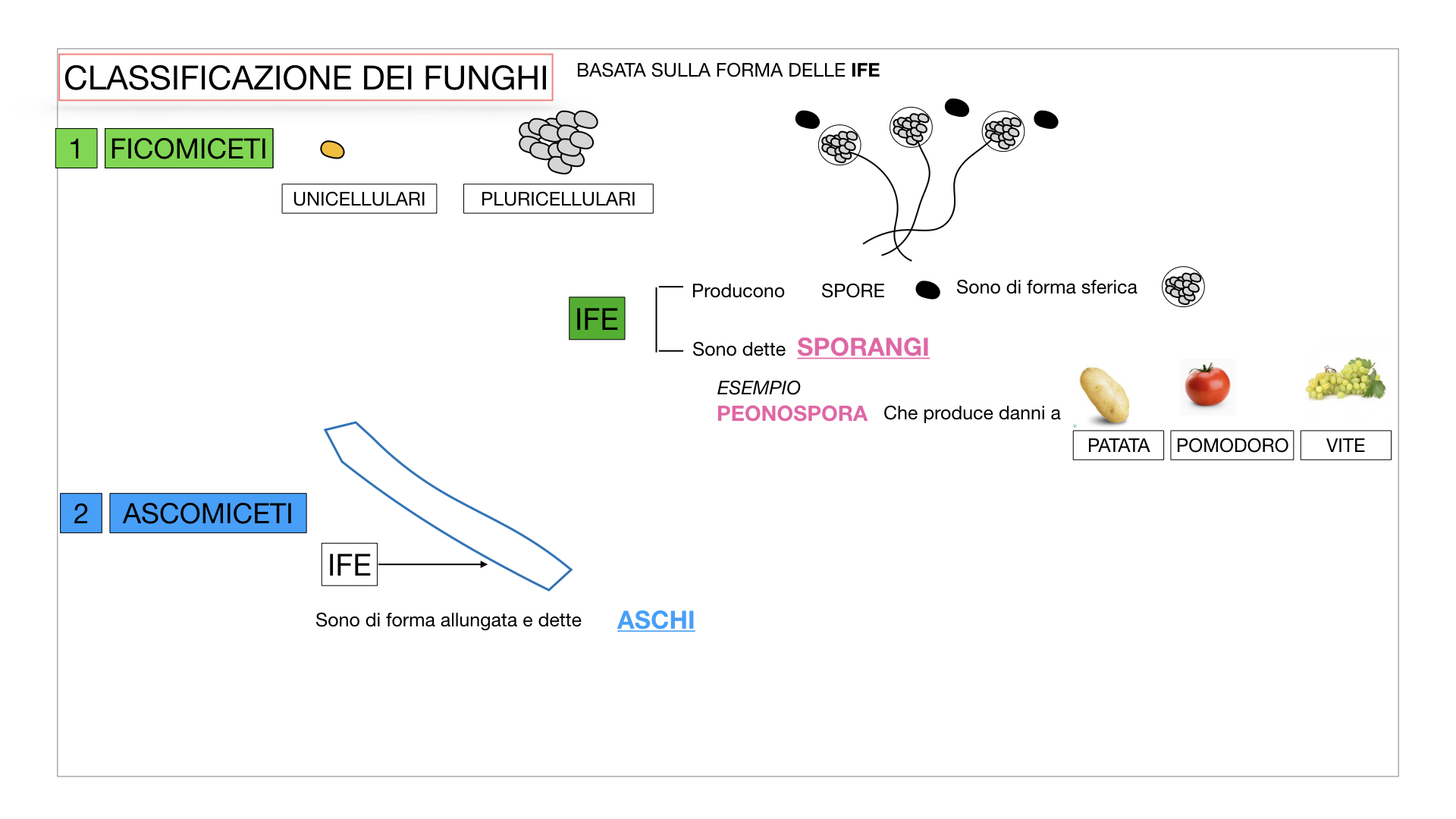 10. i funghi_SIMULAZIONE PARTE2.016