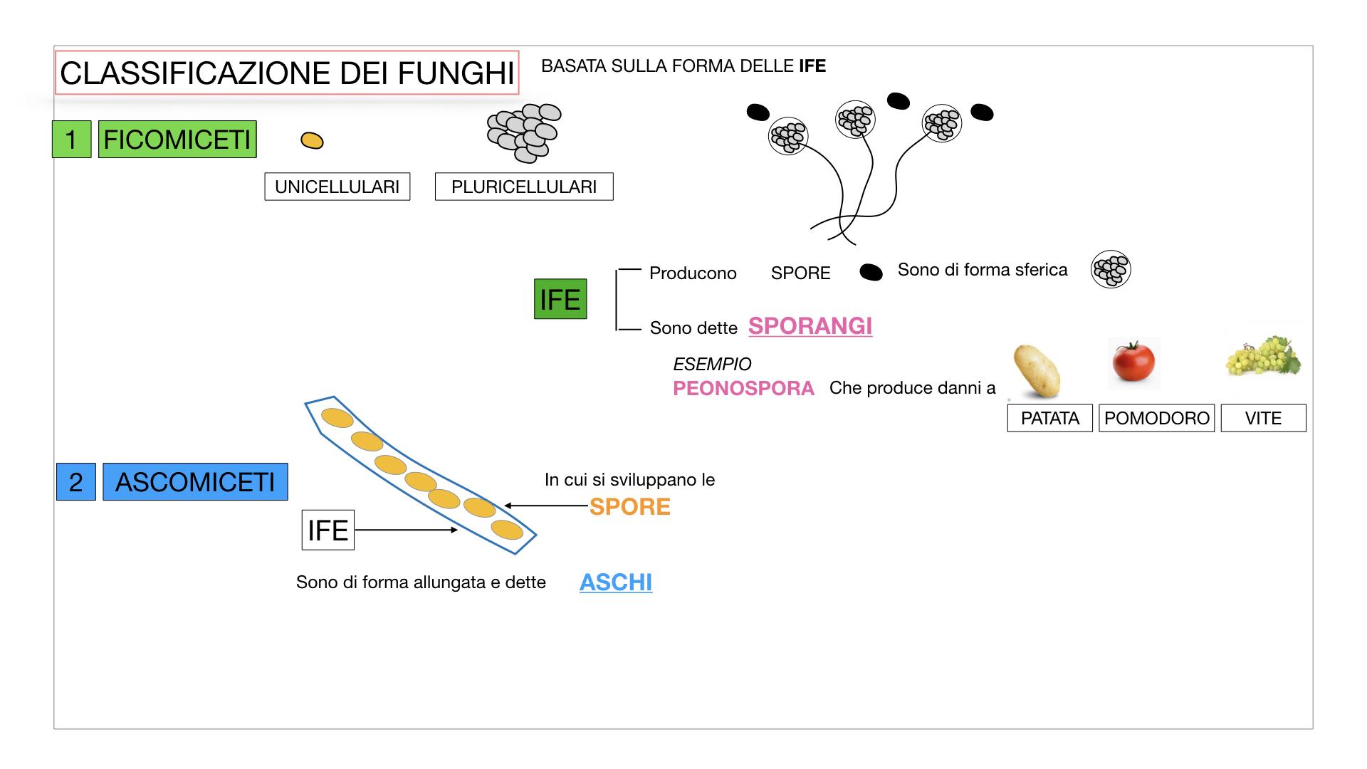 10. i funghi_SIMULAZIONE PARTE2.017