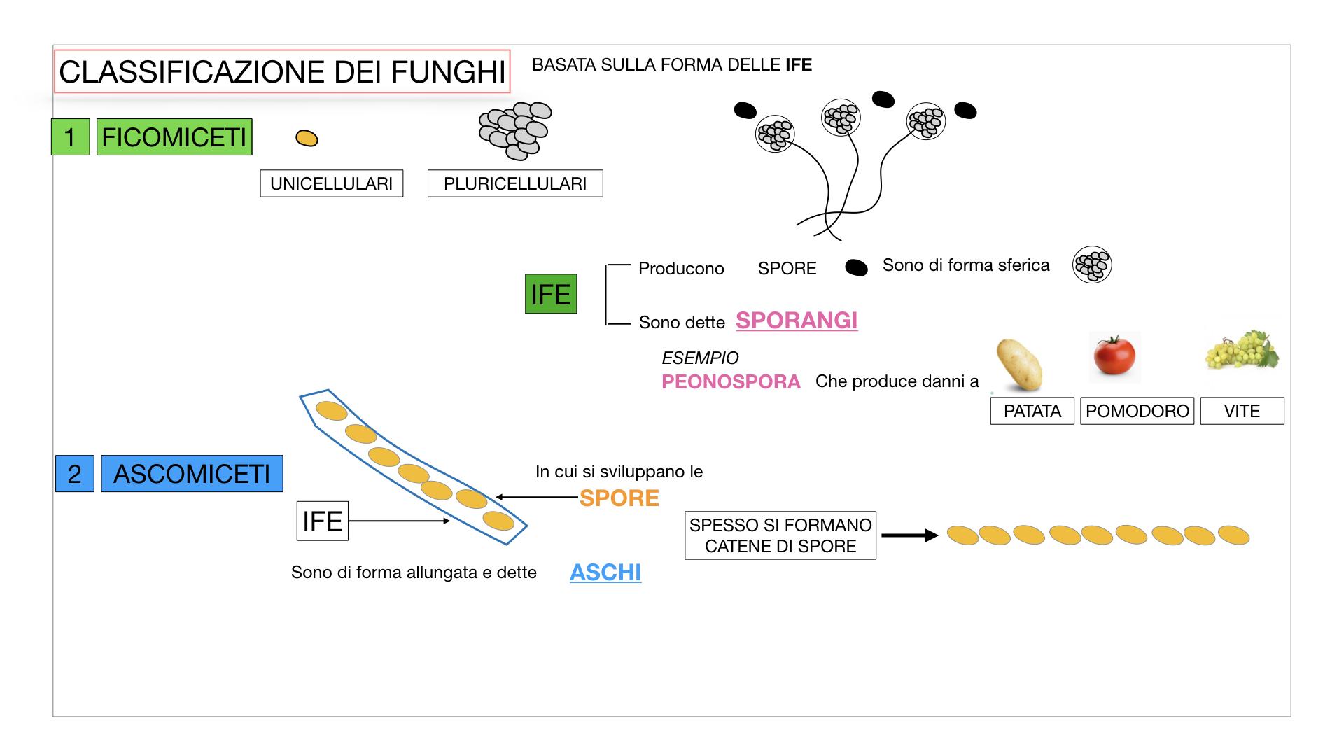 10. i funghi_SIMULAZIONE PARTE2.018