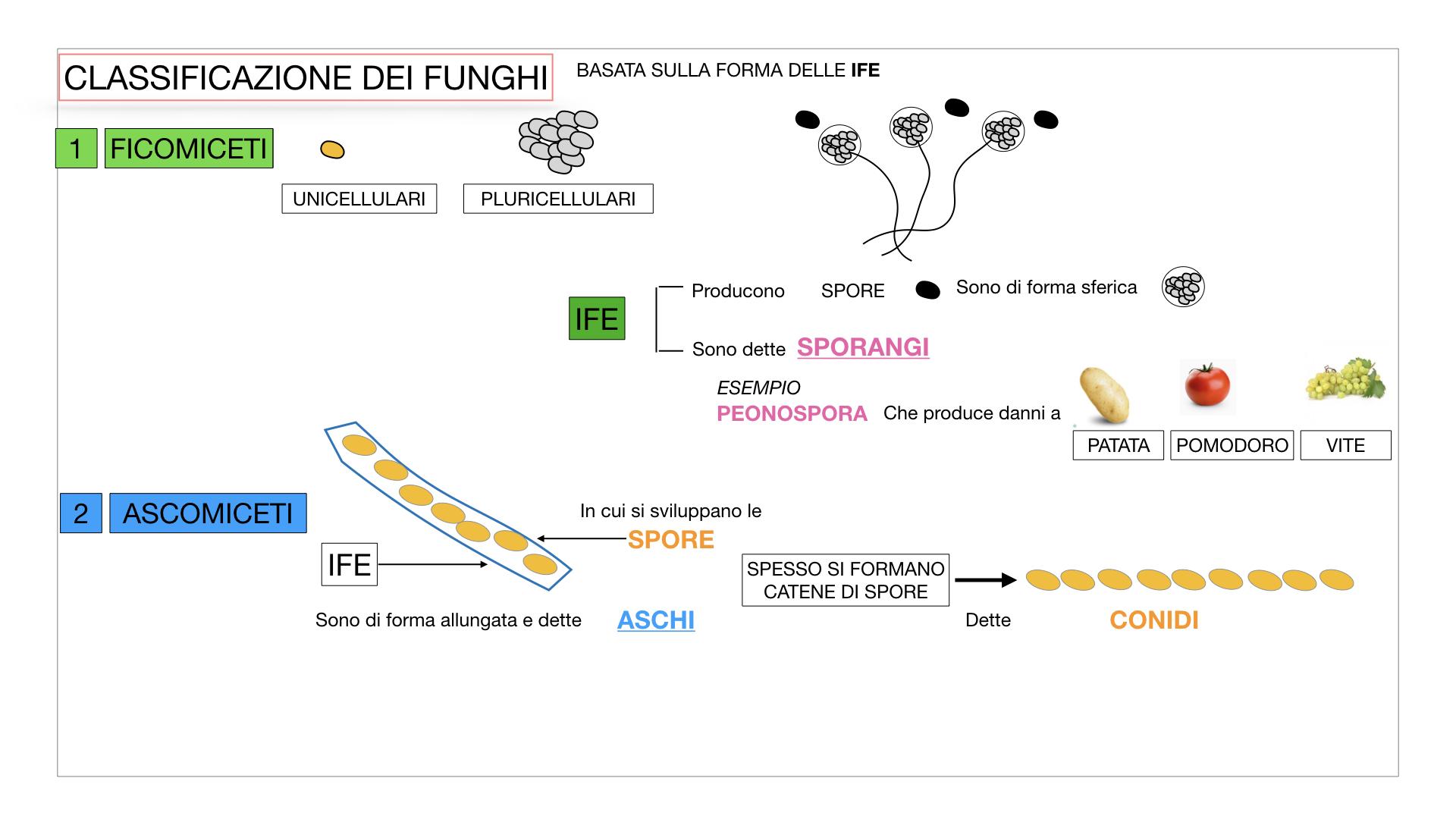 10. i funghi_SIMULAZIONE PARTE2.019