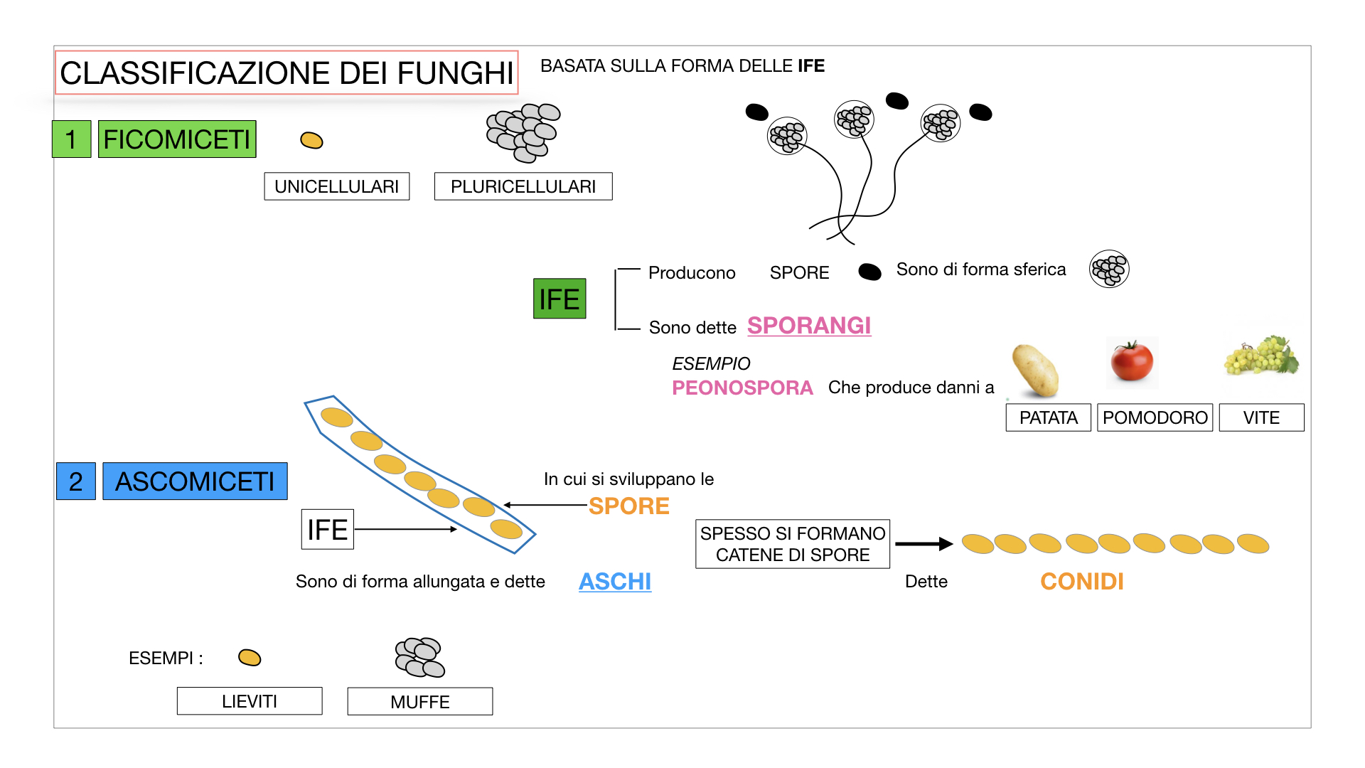 10. i funghi_SIMULAZIONE PARTE2.021