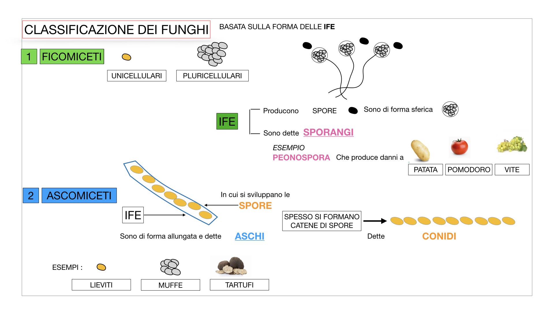 10. i funghi_SIMULAZIONE PARTE2.022
