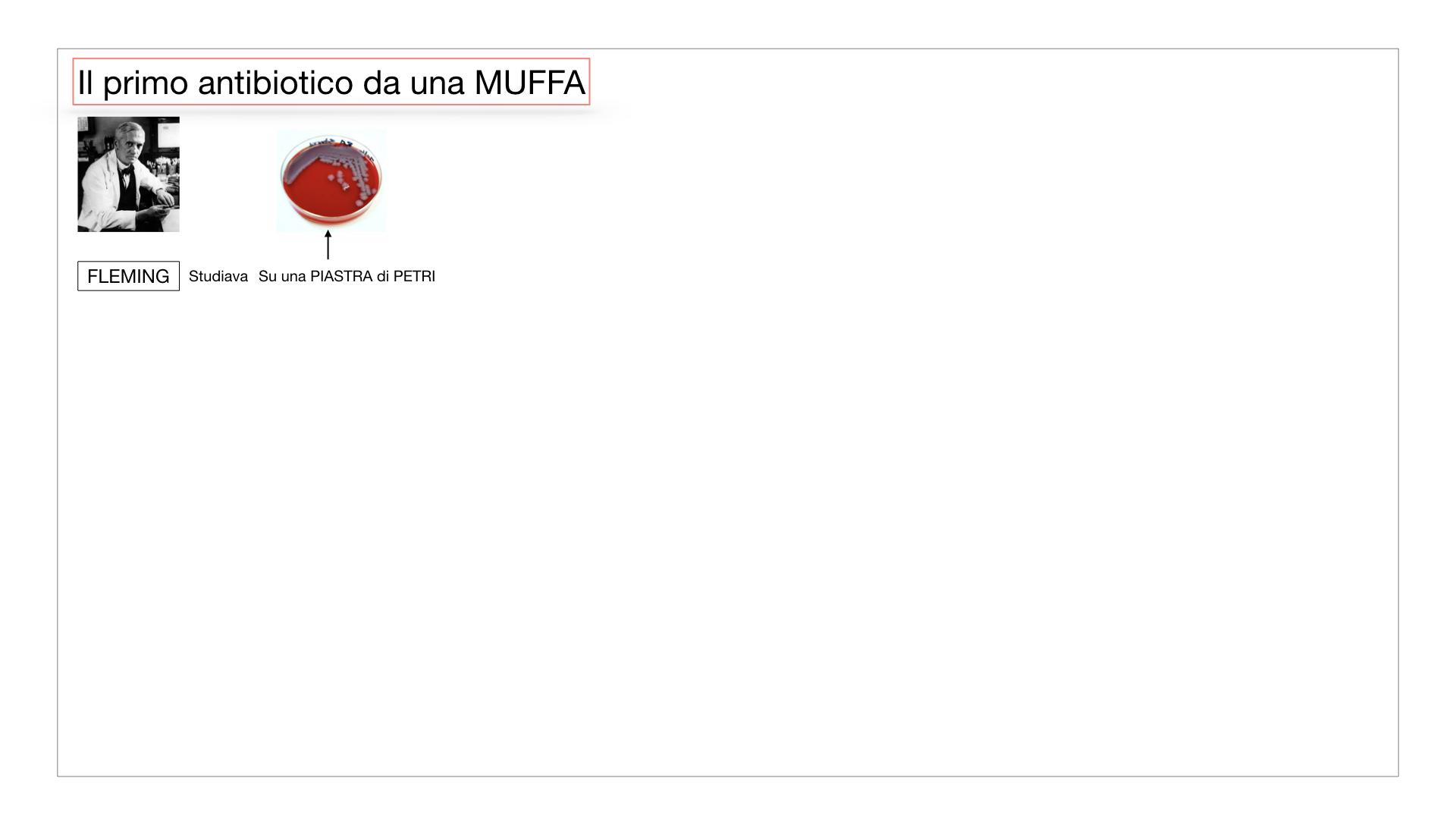 10. i funghi_SIMULAZIONE PARTE2.025