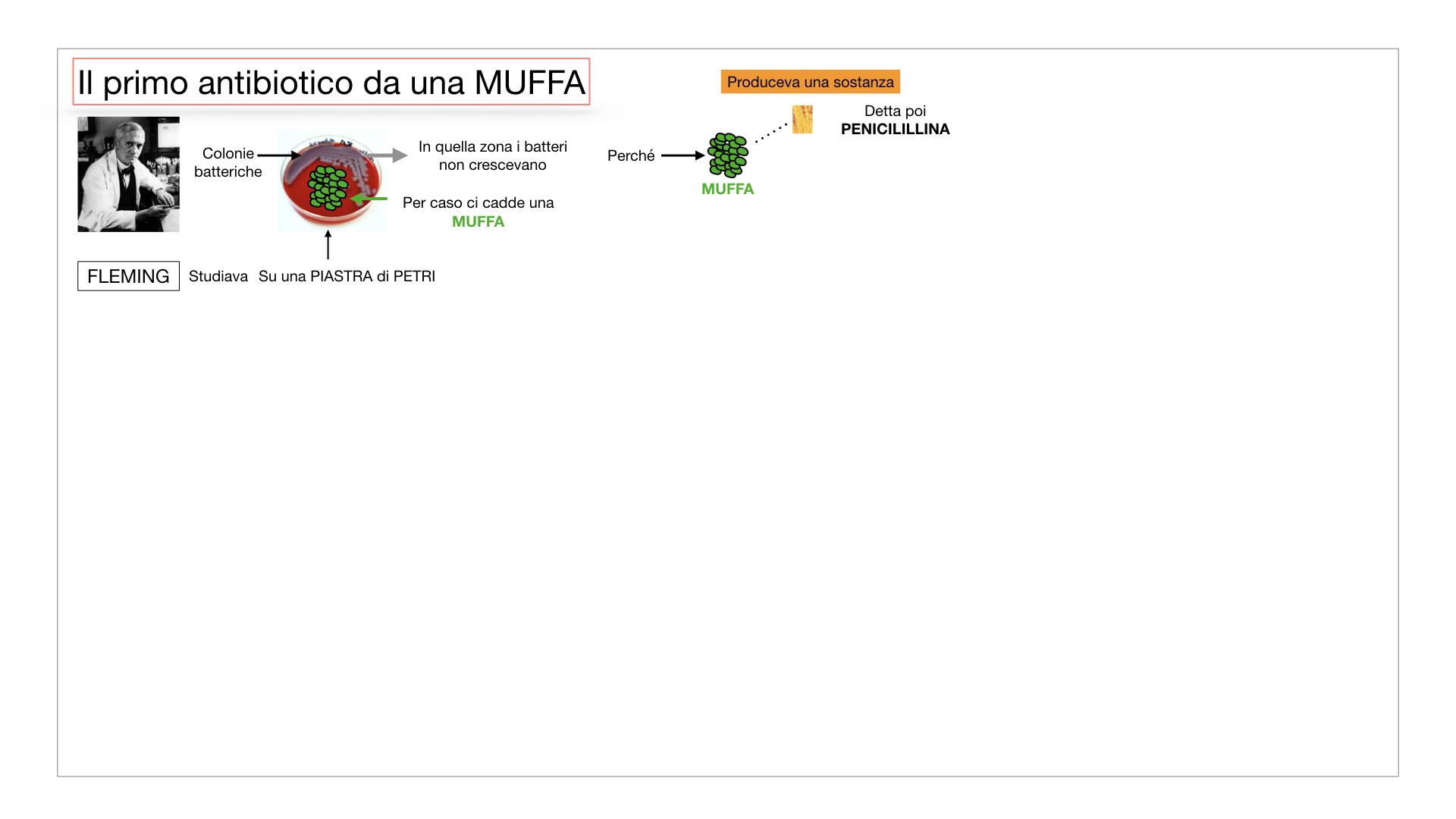 10. i funghi_SIMULAZIONE PARTE2.029
