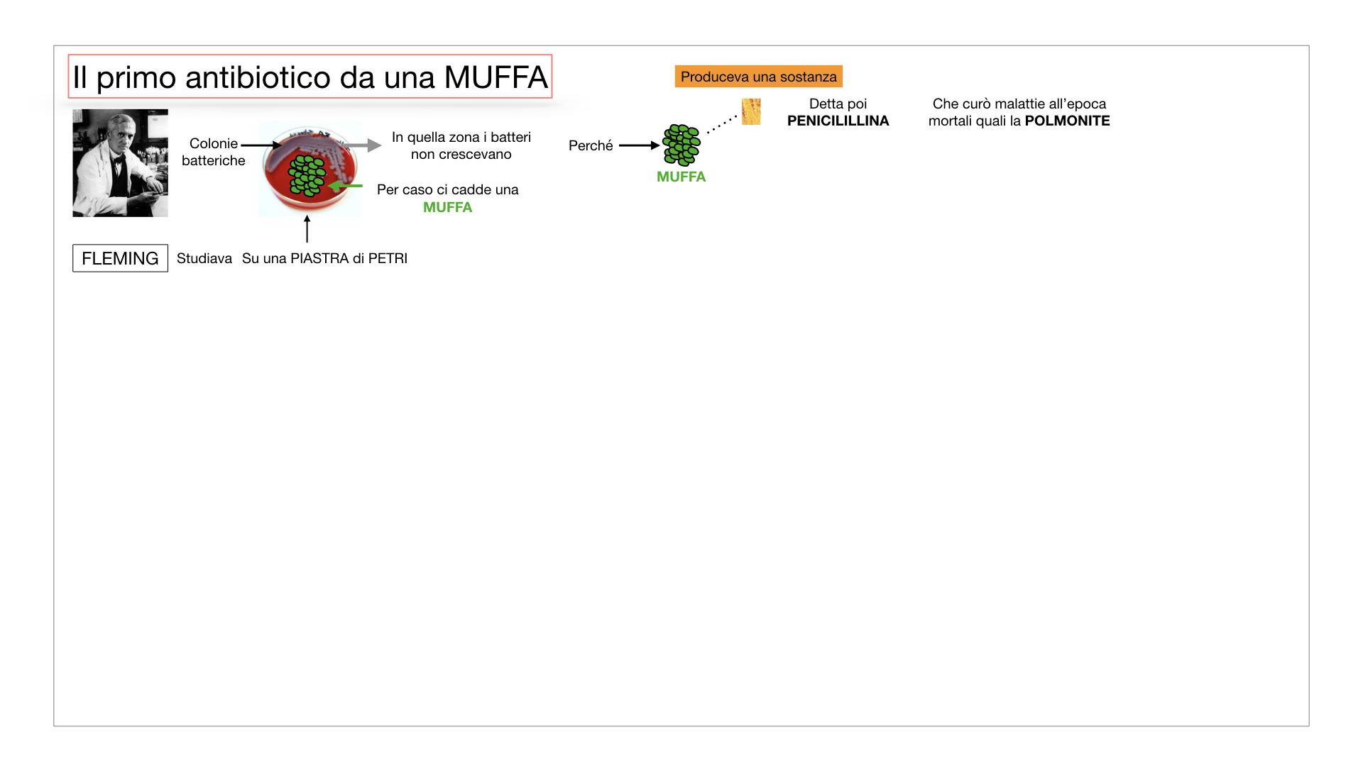 10. i funghi_SIMULAZIONE PARTE2.030