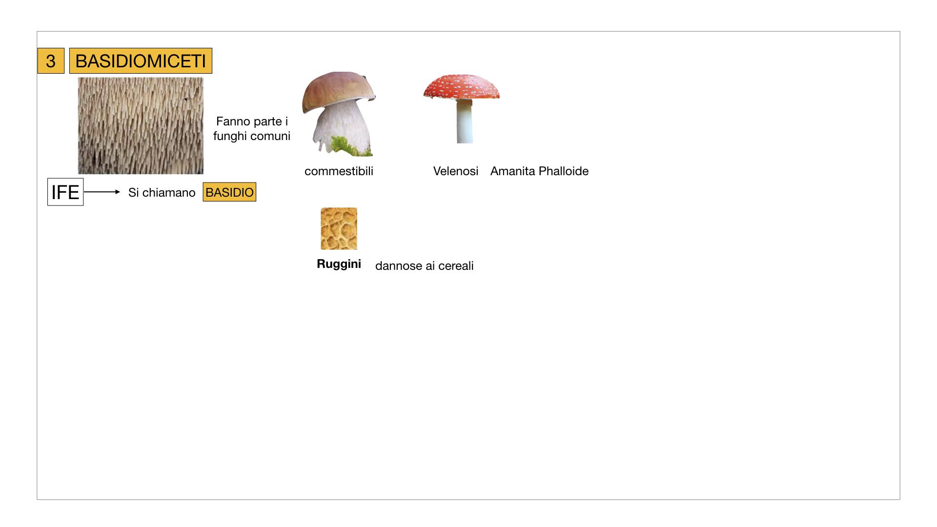 10. i funghi_SIMULAZIONE PARTE2.035