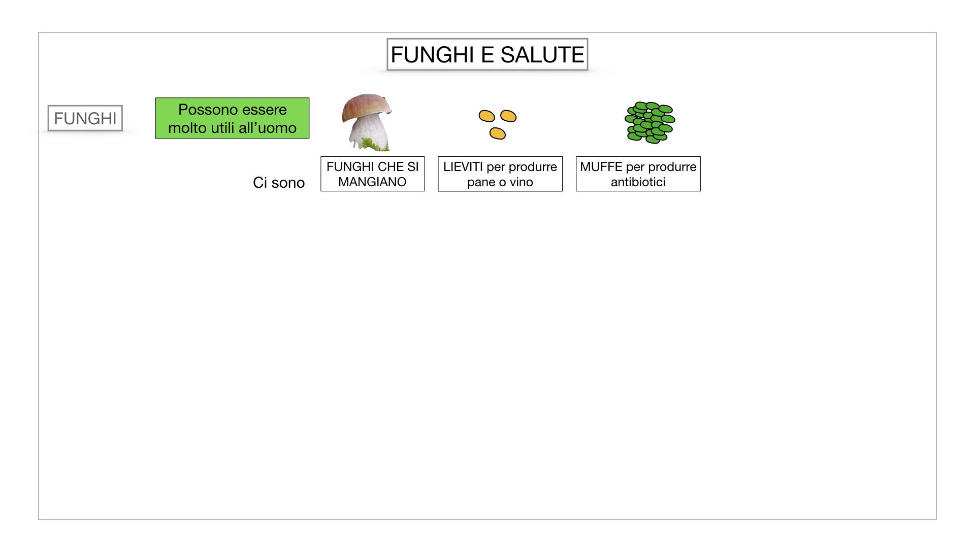 10. i funghi_SIMULAZIONE PARTE2.064