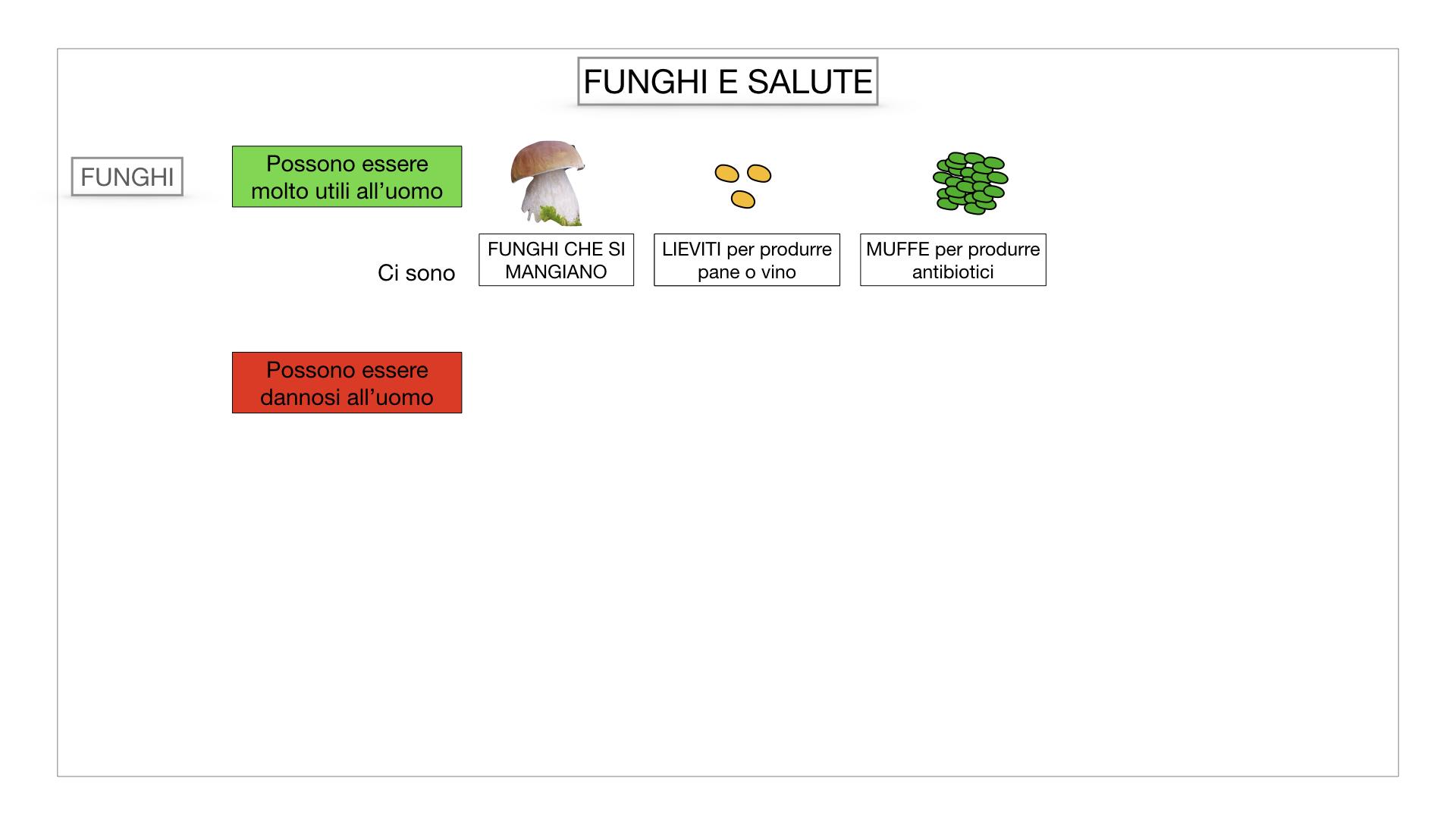 10. i funghi_SIMULAZIONE PARTE2.065