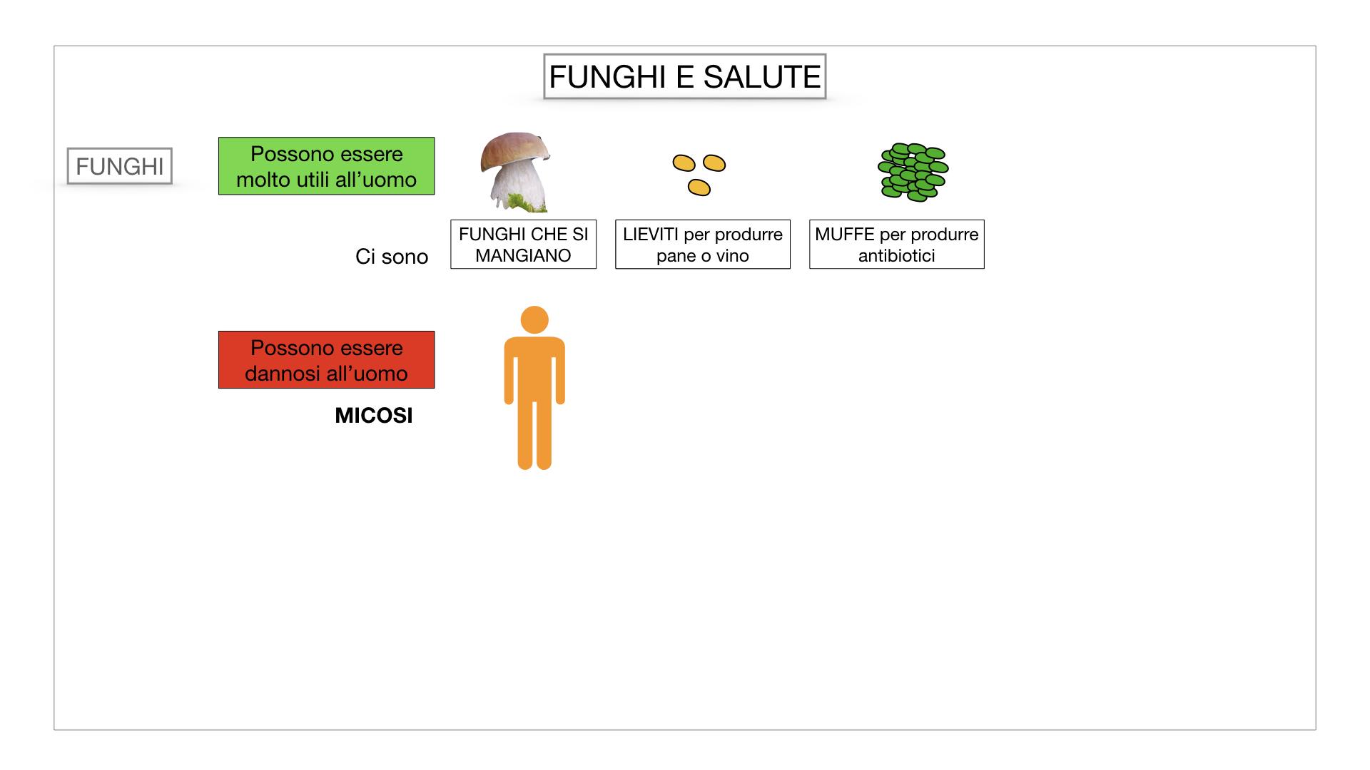 10. i funghi_SIMULAZIONE PARTE2.066