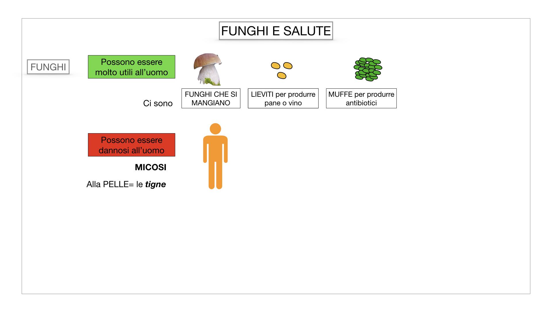 10. i funghi_SIMULAZIONE PARTE2.067