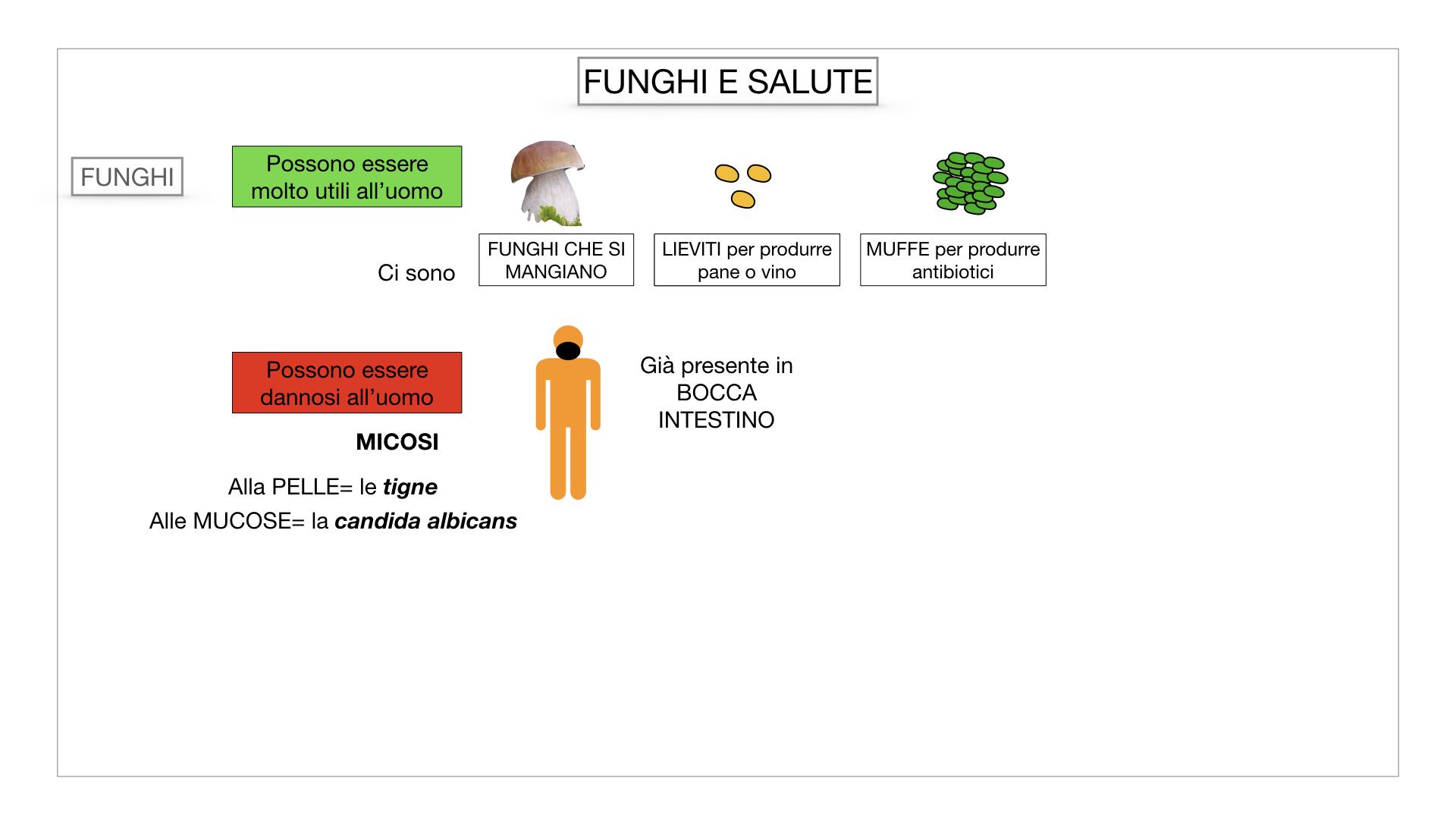 10. i funghi_SIMULAZIONE PARTE2.069