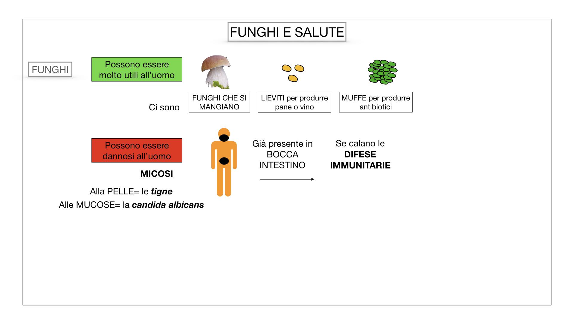 10. i funghi_SIMULAZIONE PARTE2.070