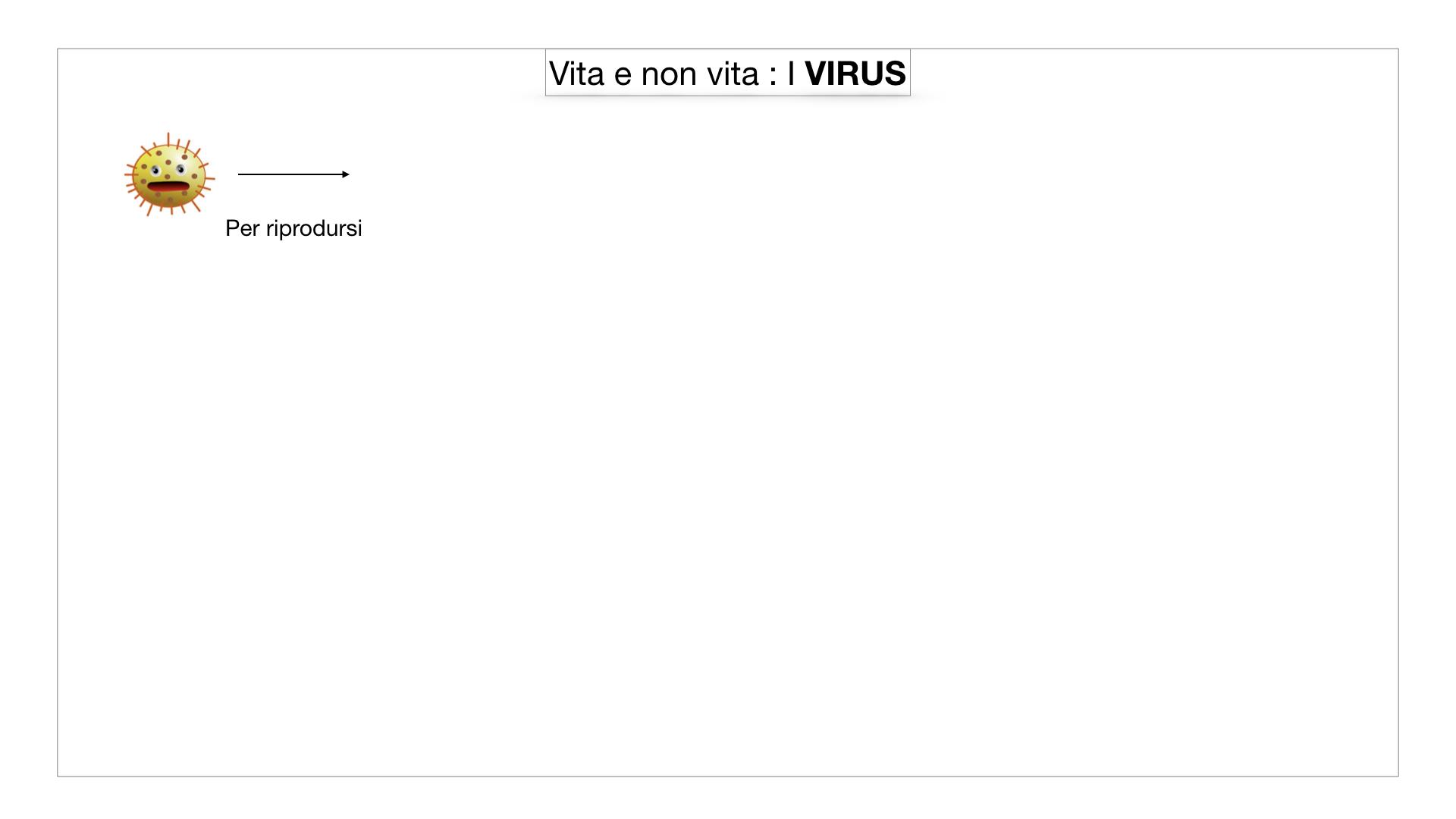 5. VIRUS_SIMULAZIONE.002