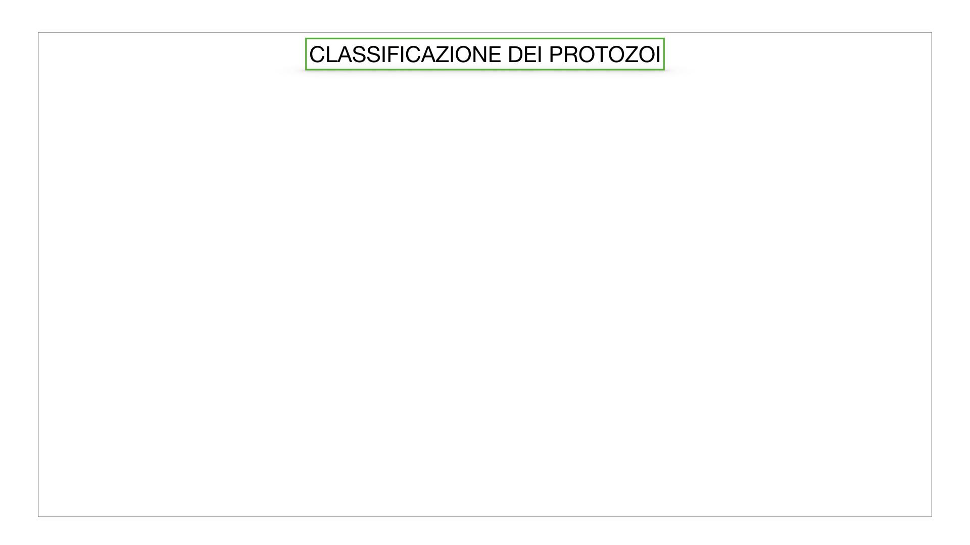 6. PROTOZOI_classificazione_SIMULAZIONE.001
