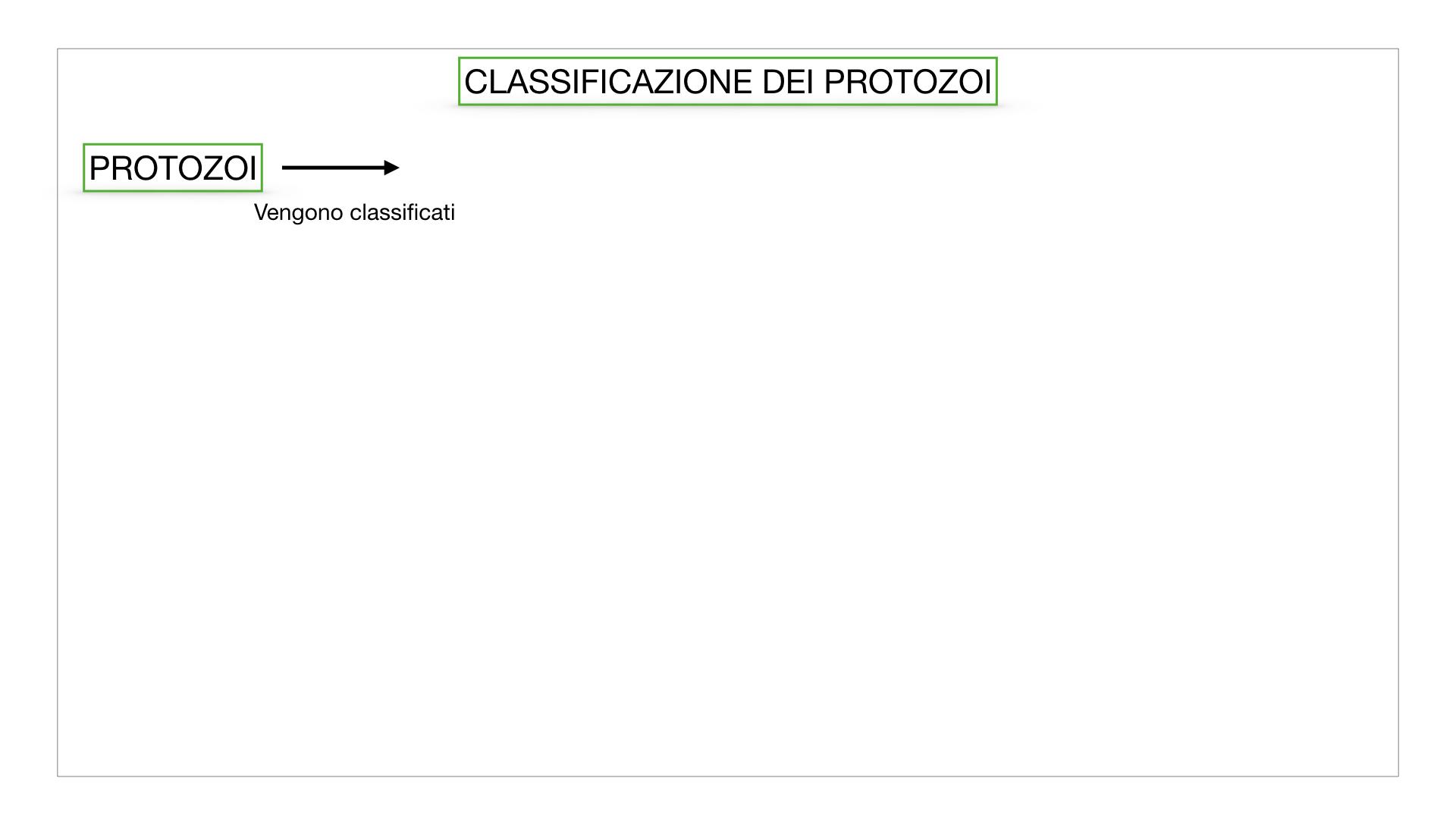 6. PROTOZOI_classificazione_SIMULAZIONE.002