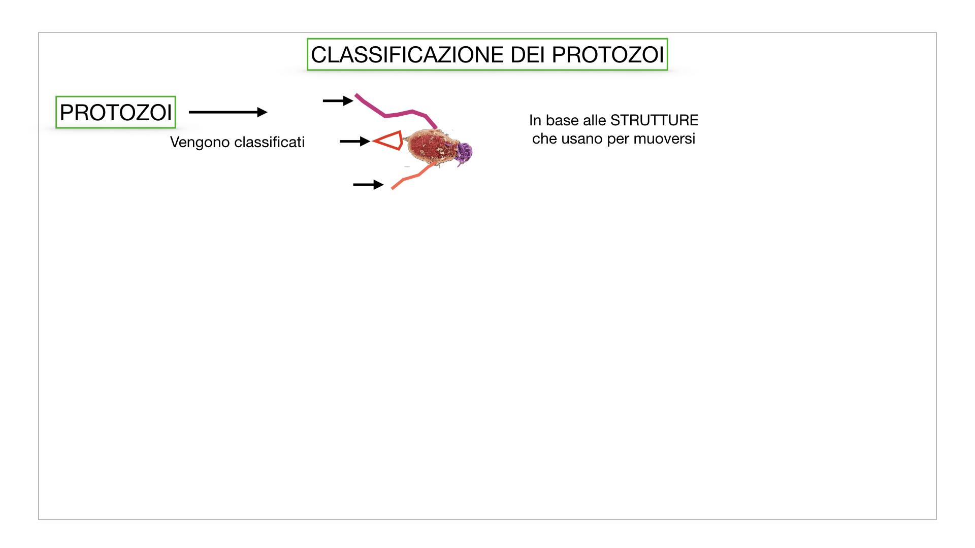 6. PROTOZOI_classificazione_SIMULAZIONE.003