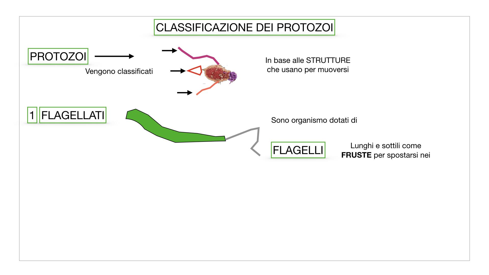 6. PROTOZOI_classificazione_SIMULAZIONE.006