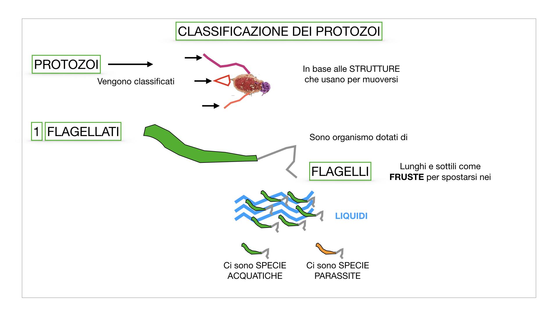6. PROTOZOI_classificazione_SIMULAZIONE.009