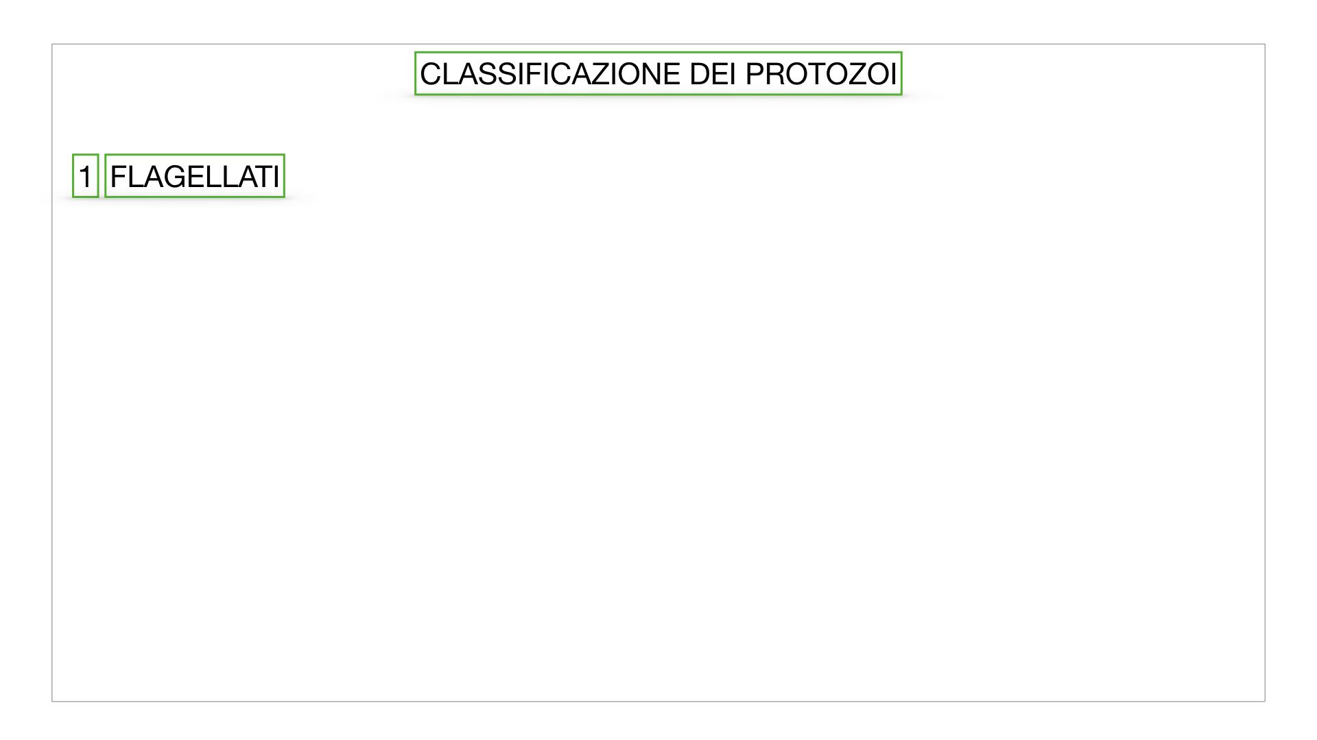 6. PROTOZOI_classificazione_SIMULAZIONE.011