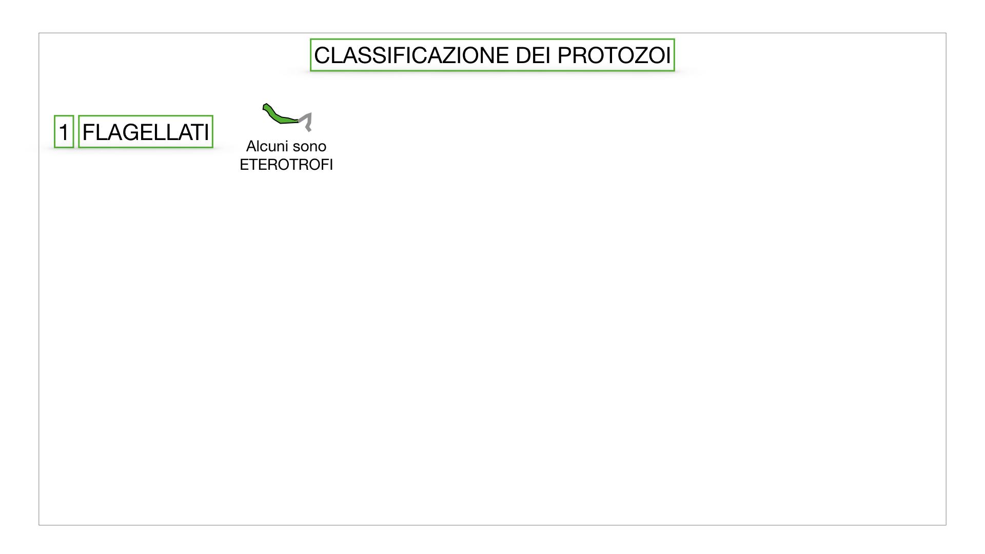 6. PROTOZOI_classificazione_SIMULAZIONE.012