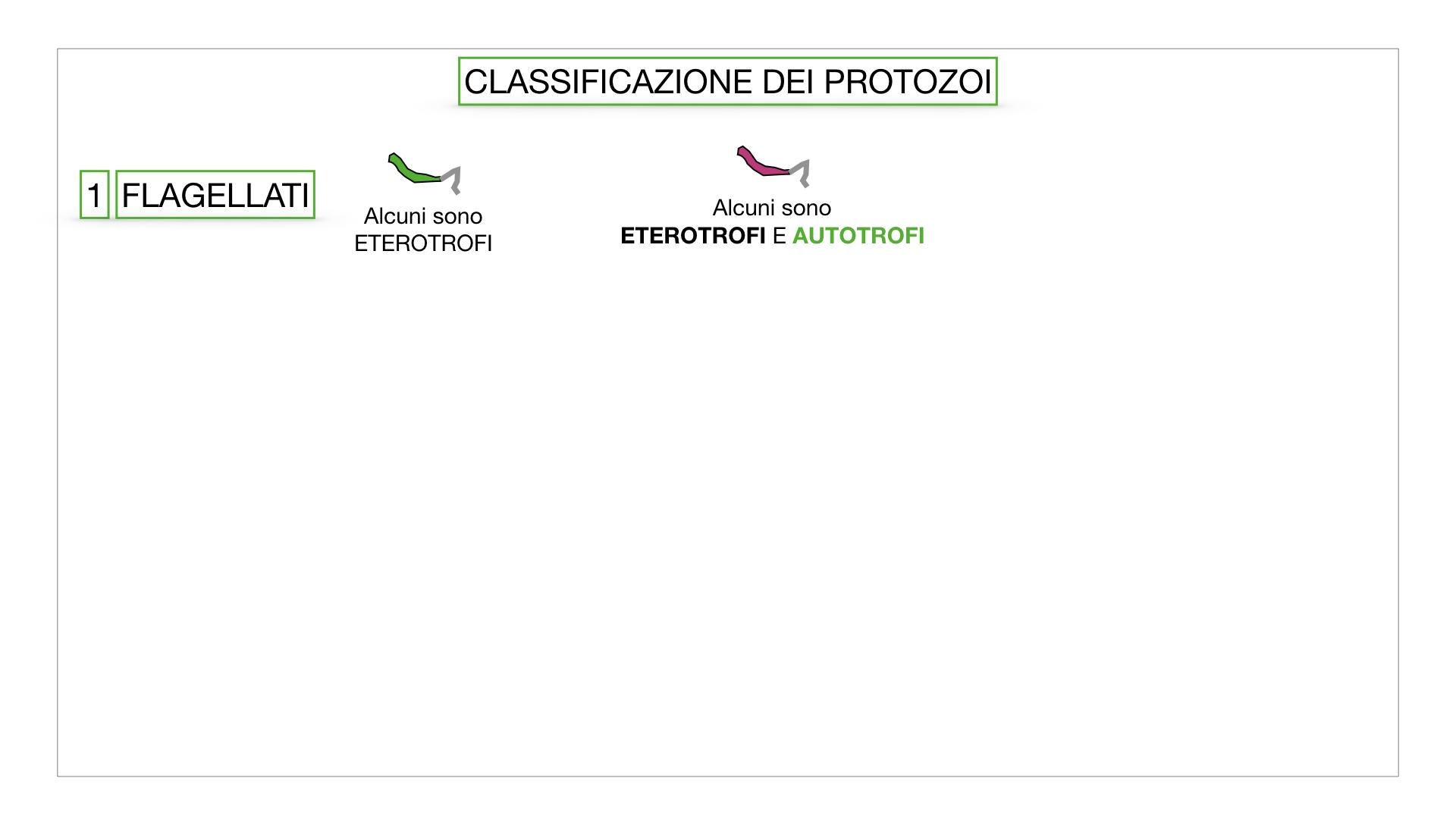 6. PROTOZOI_classificazione_SIMULAZIONE.013