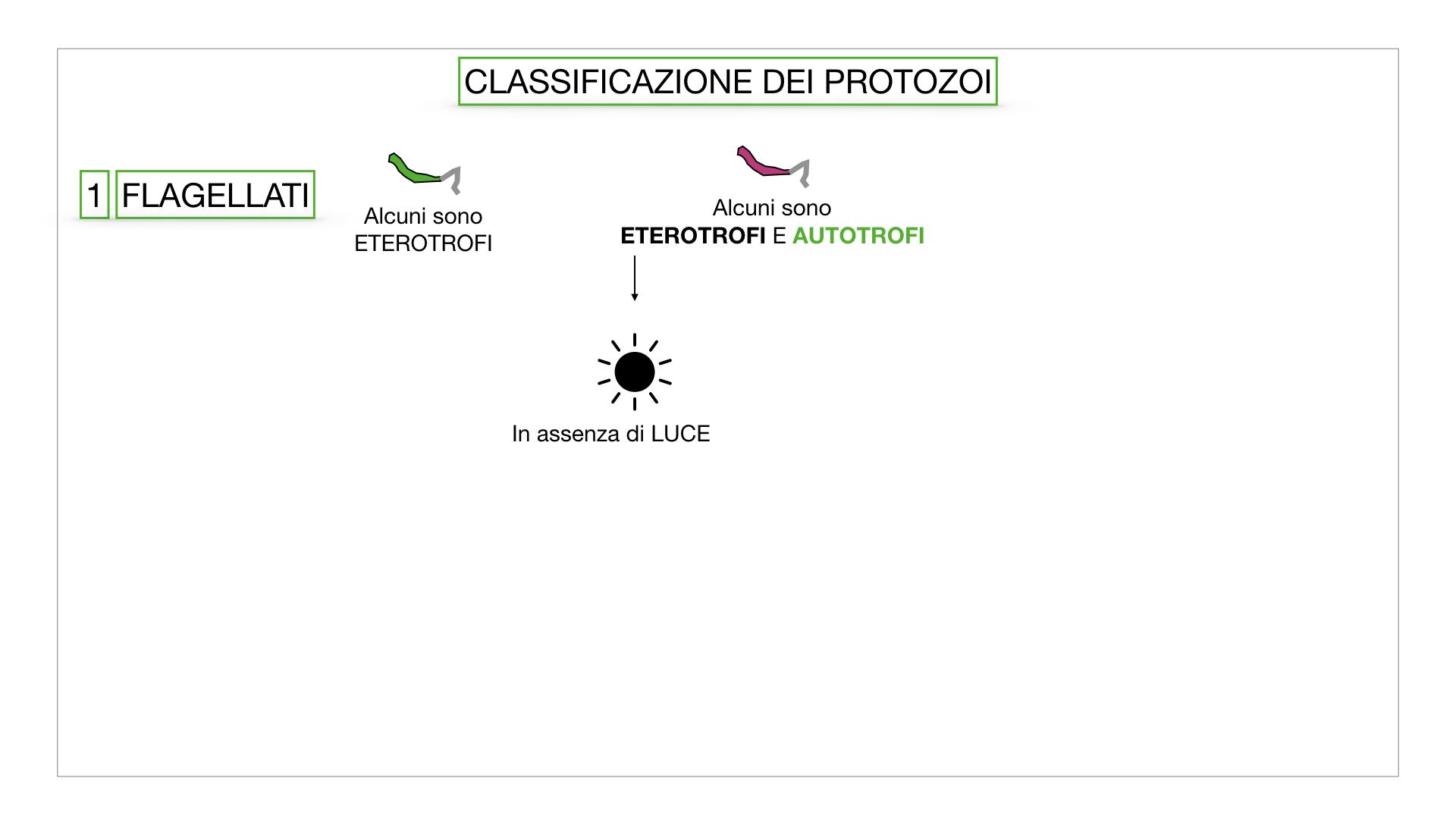 6. PROTOZOI_classificazione_SIMULAZIONE.014