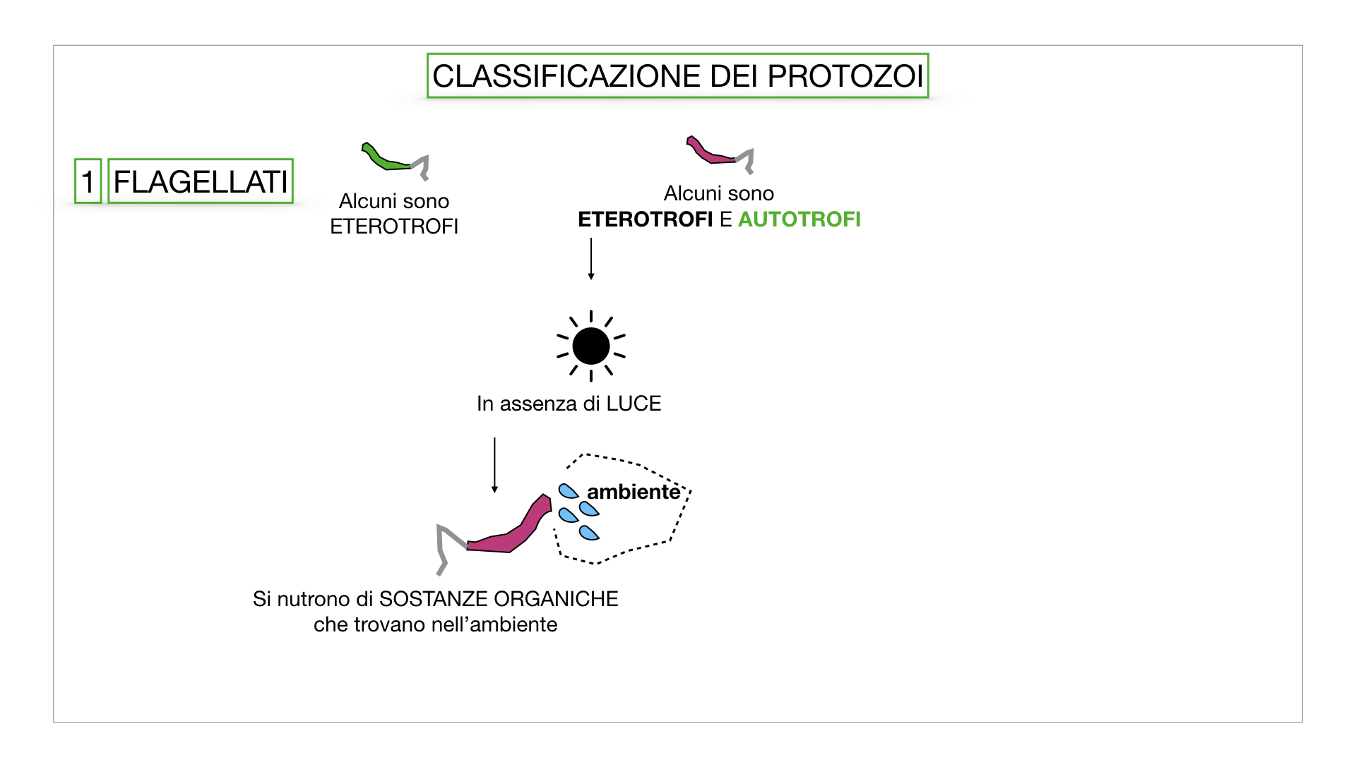 6. PROTOZOI_classificazione_SIMULAZIONE.015