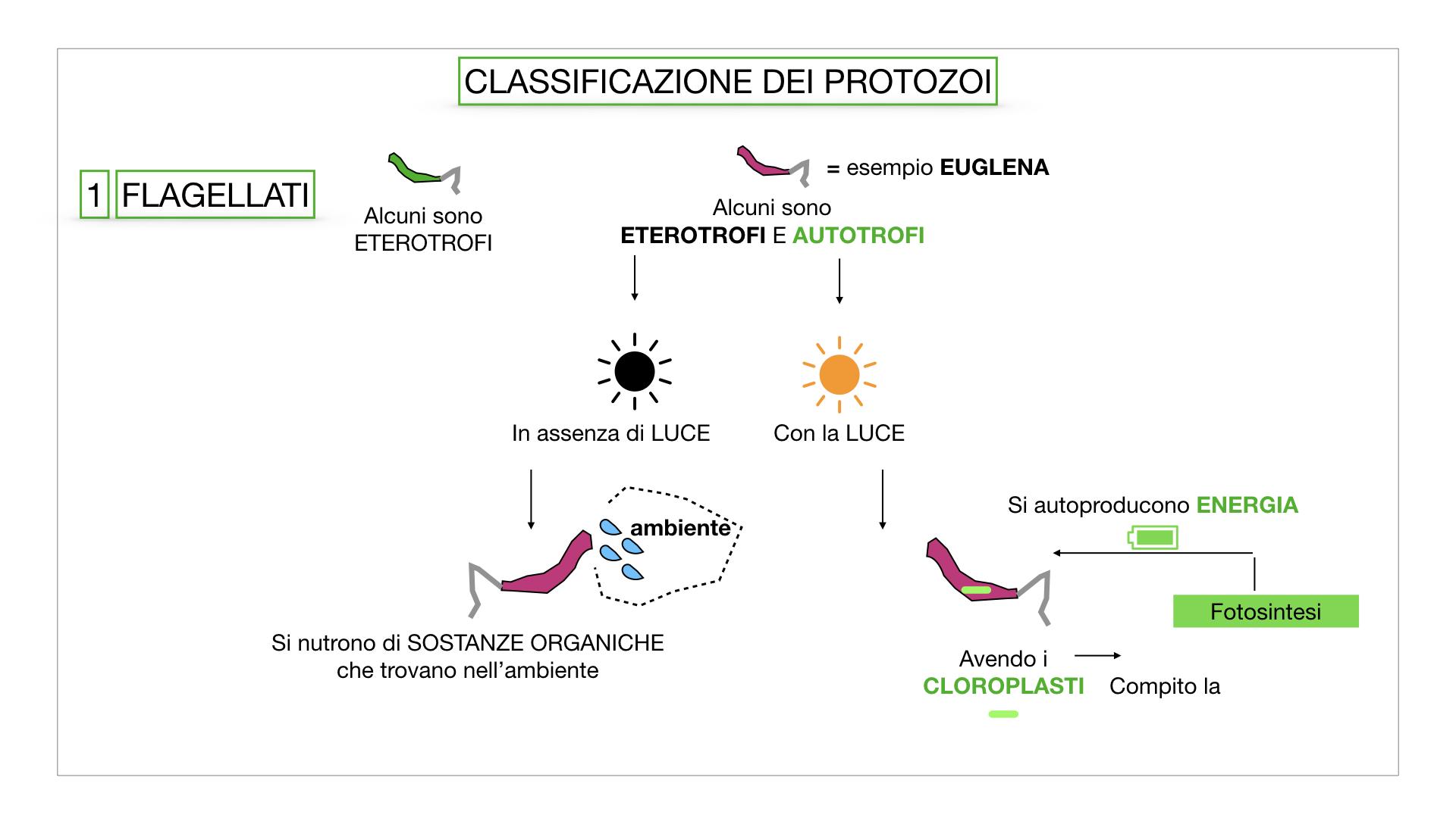 6. PROTOZOI_classificazione_SIMULAZIONE.020