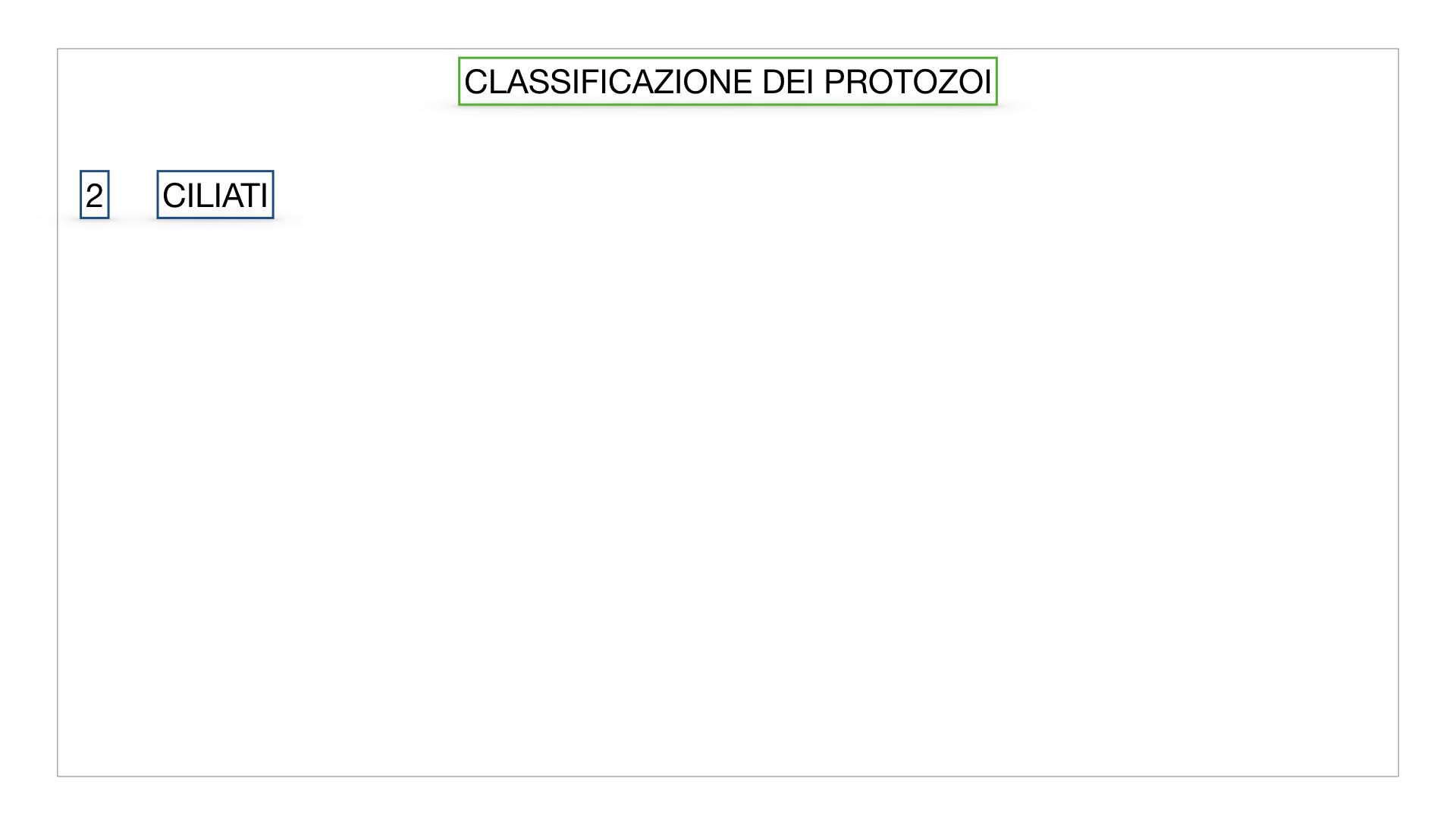 6. PROTOZOI_classificazione_SIMULAZIONE.022
