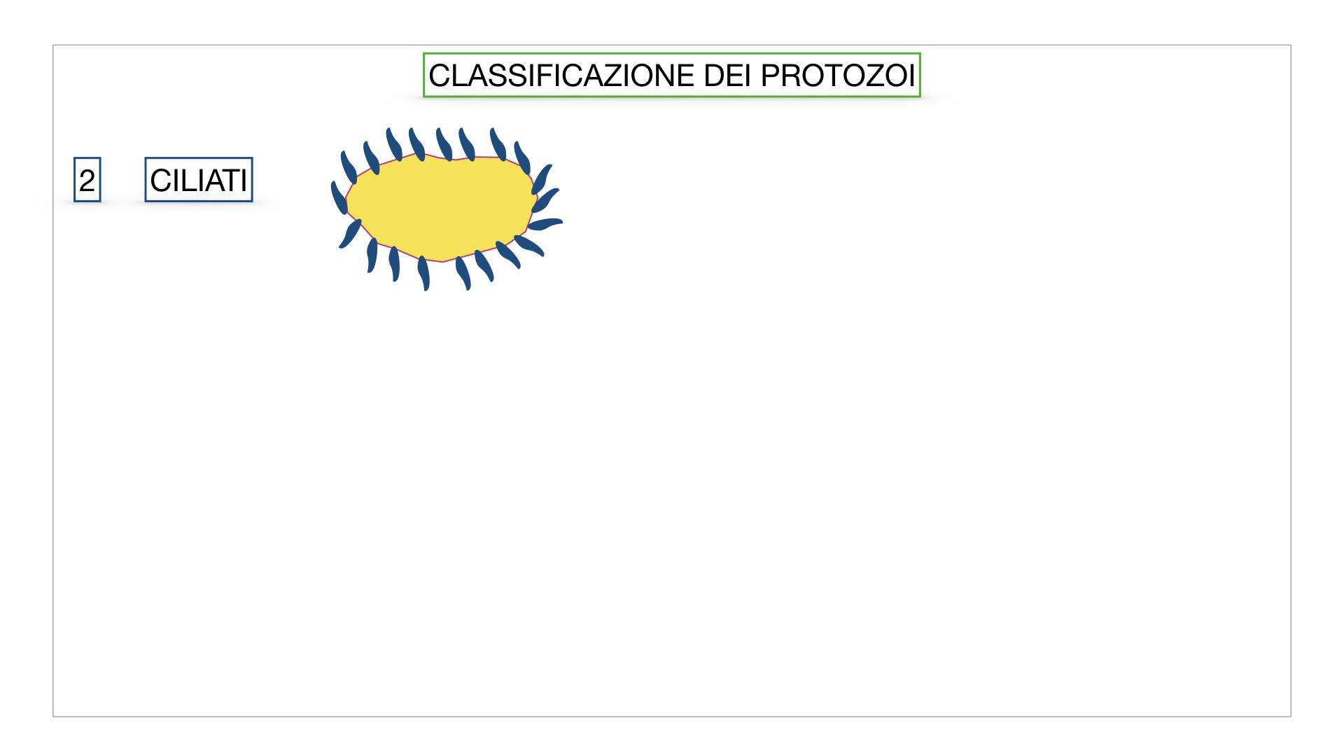 6. PROTOZOI_classificazione_SIMULAZIONE.023