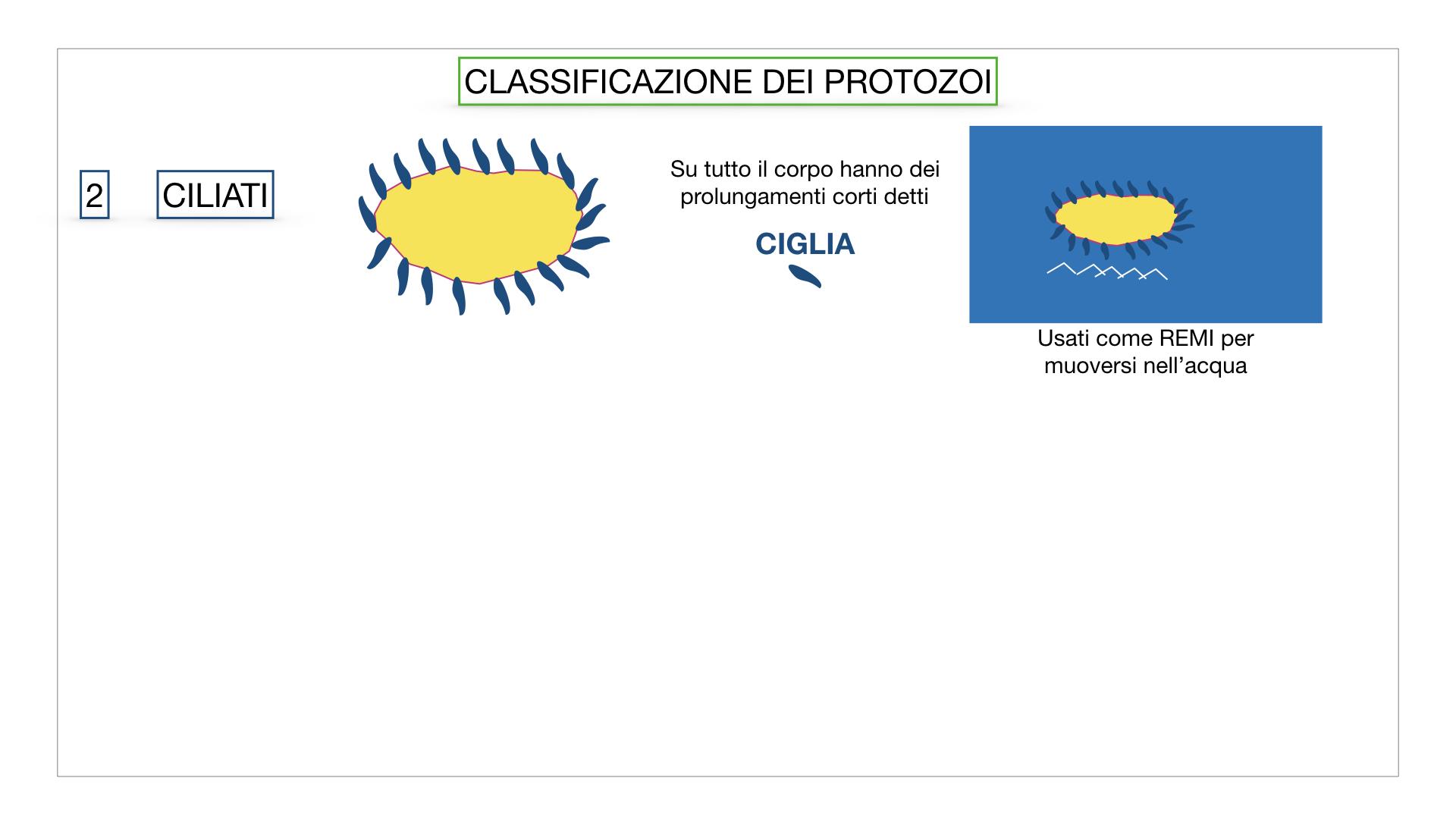 6. PROTOZOI_classificazione_SIMULAZIONE.025