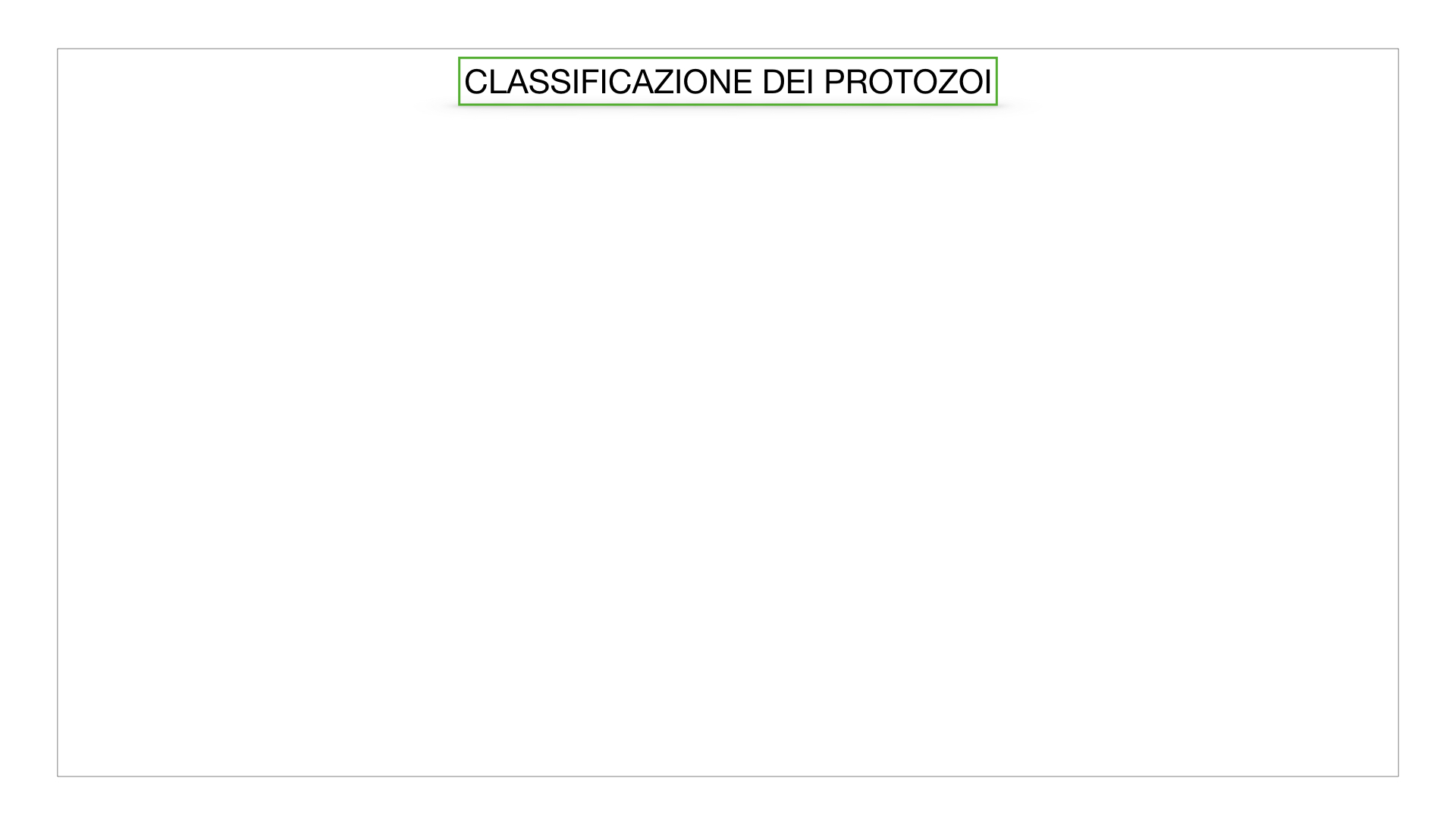 6. PROTOZOI_classificazione_SIMULAZIONE.027