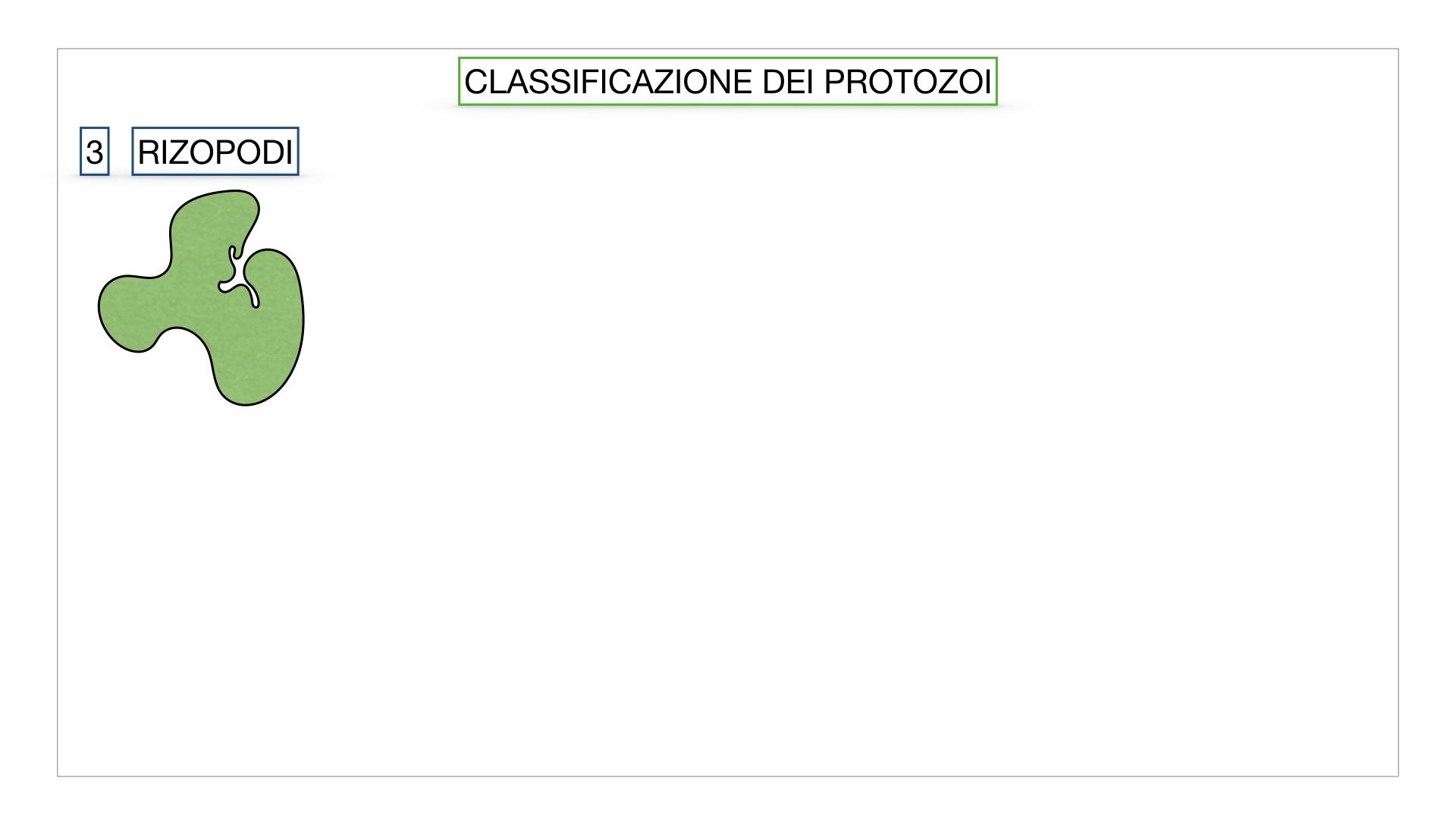 6. PROTOZOI_classificazione_SIMULAZIONE.028