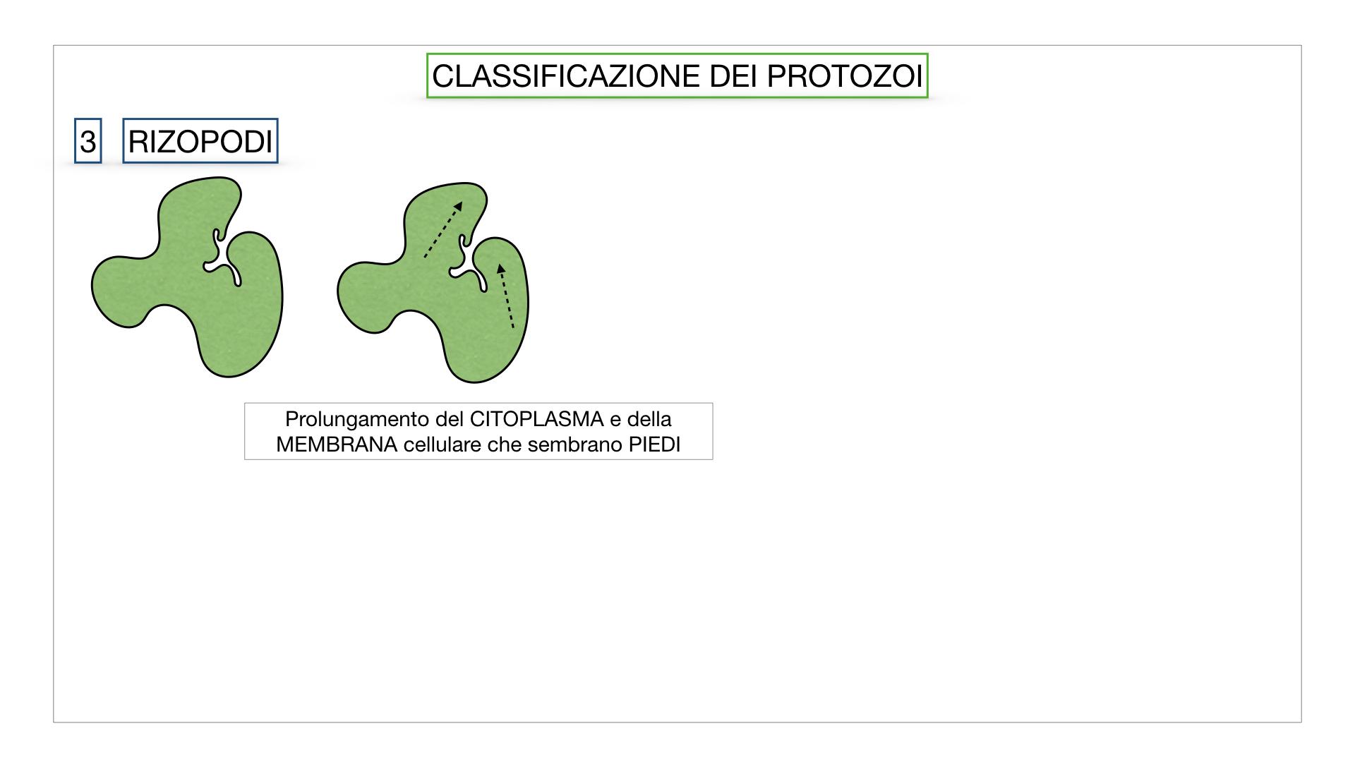 6. PROTOZOI_classificazione_SIMULAZIONE.029