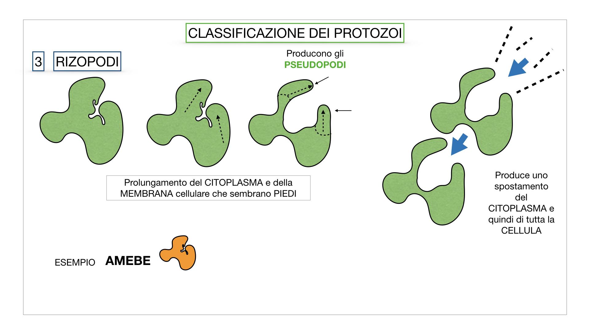 6. PROTOZOI_classificazione_SIMULAZIONE.034