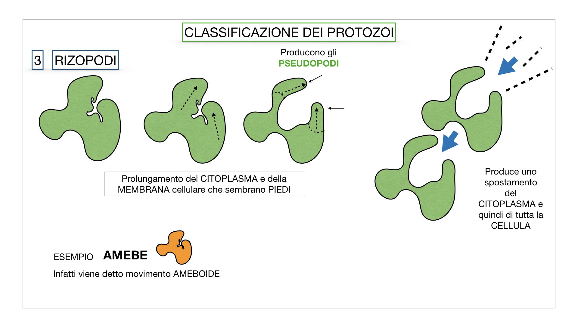 6. PROTOZOI_classificazione_SIMULAZIONE.035