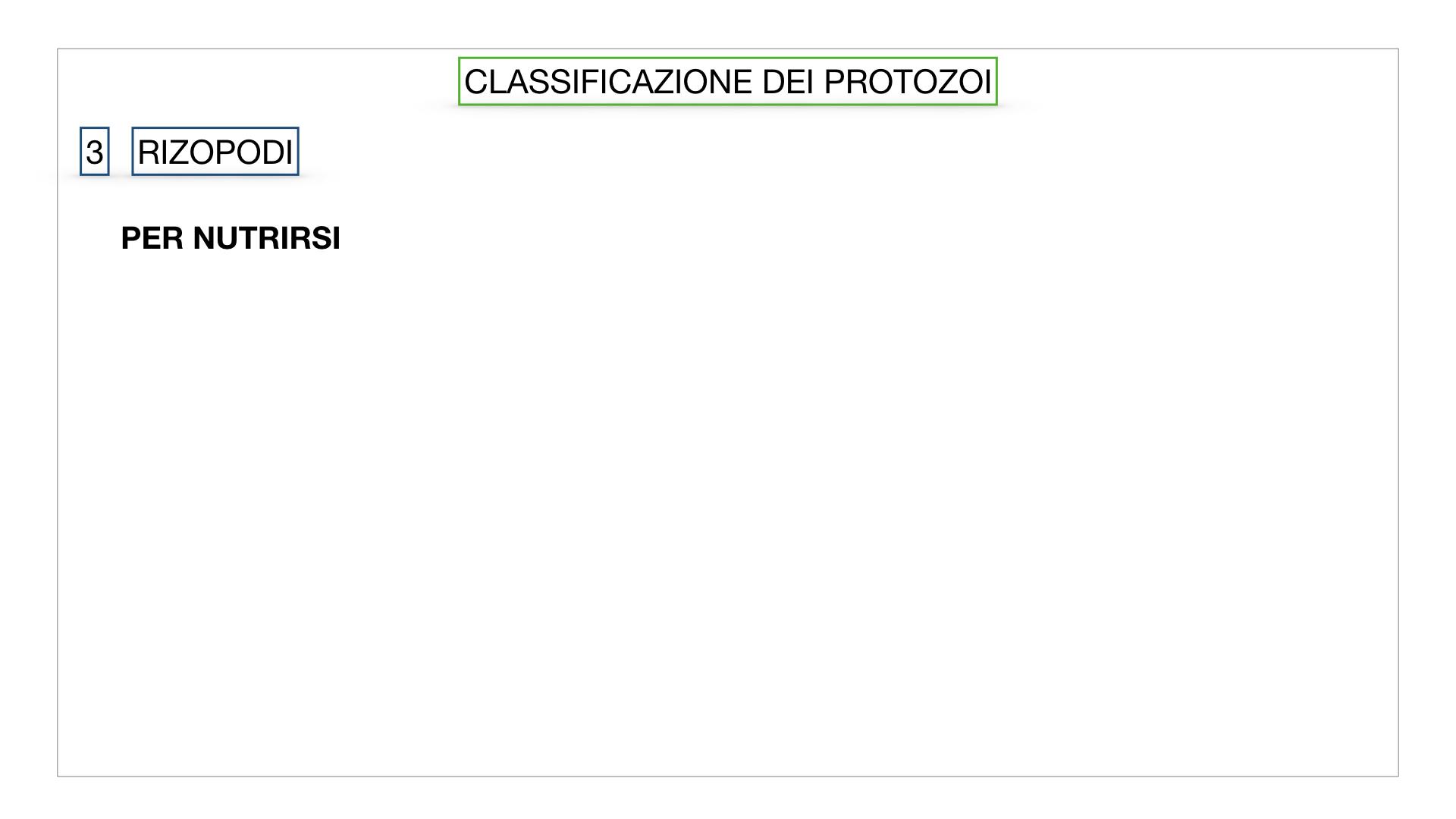 6. PROTOZOI_classificazione_SIMULAZIONE.036