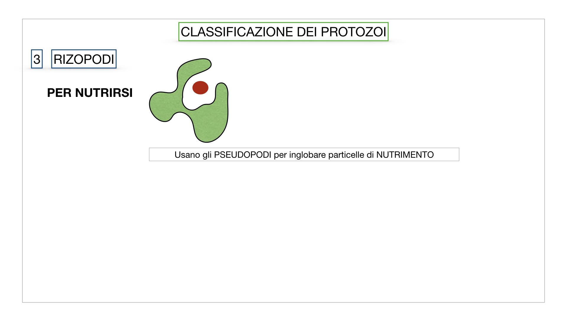 6. PROTOZOI_classificazione_SIMULAZIONE.037