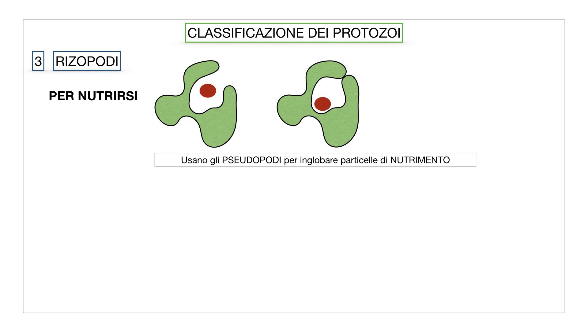 6. PROTOZOI_classificazione_SIMULAZIONE.038