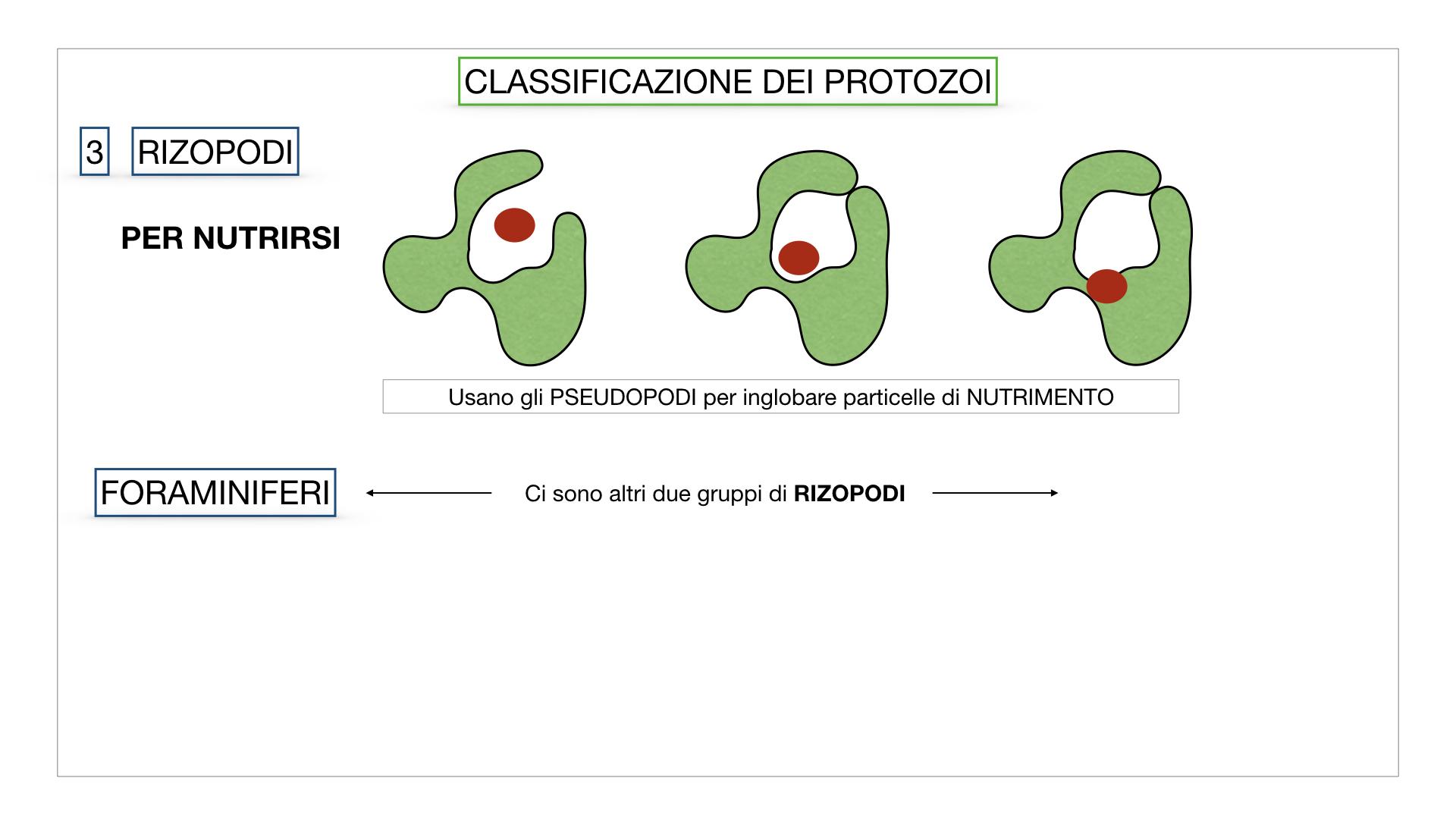 6. PROTOZOI_classificazione_SIMULAZIONE.041