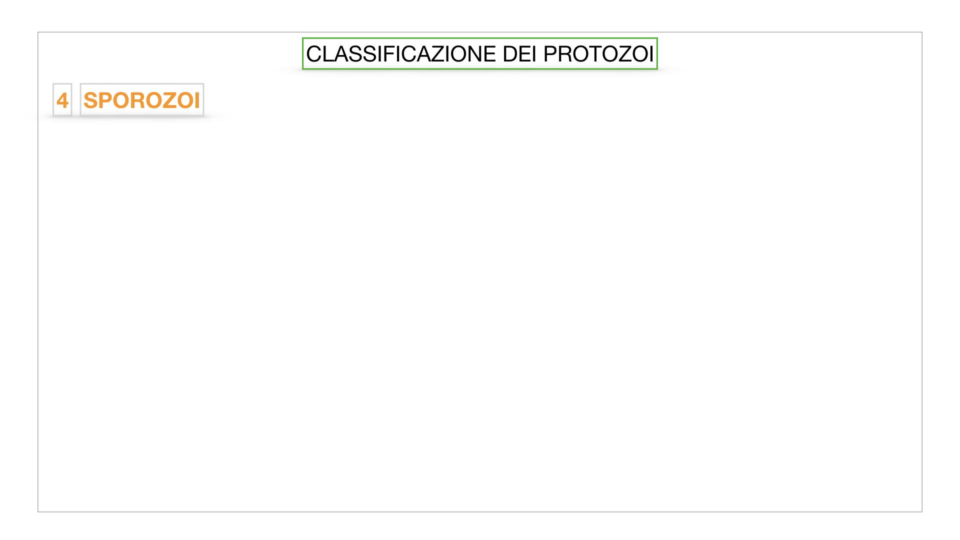 6. PROTOZOI_classificazione_SIMULAZIONE.045