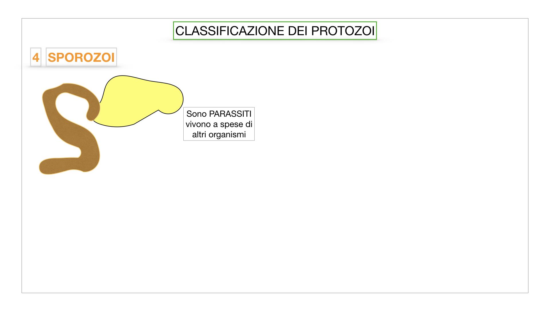 6. PROTOZOI_classificazione_SIMULAZIONE.046