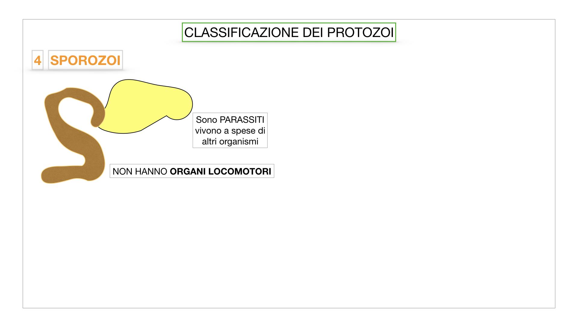 6. PROTOZOI_classificazione_SIMULAZIONE.047