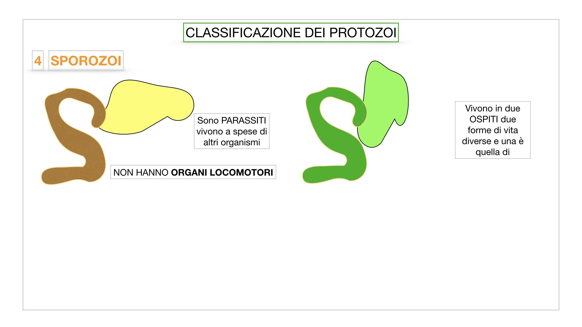 6. PROTOZOI_classificazione_SIMULAZIONE.048