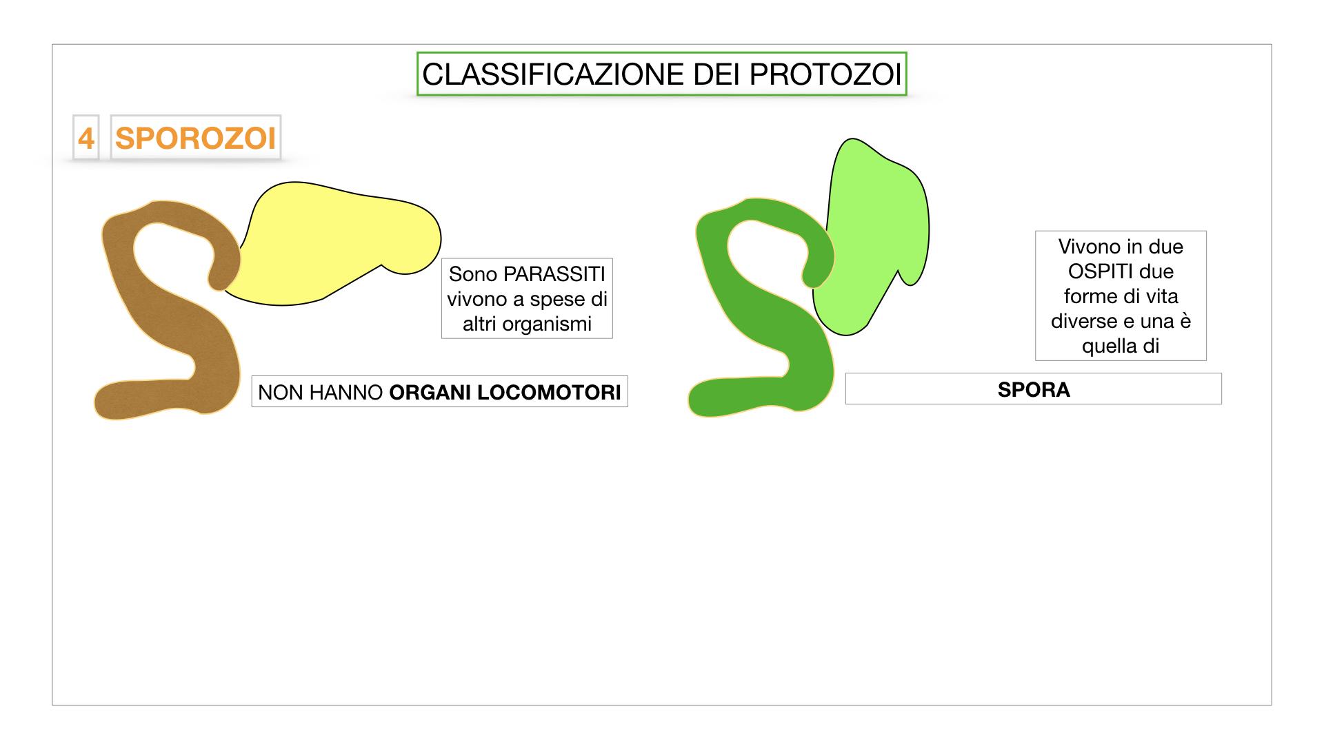 6. PROTOZOI_classificazione_SIMULAZIONE.049
